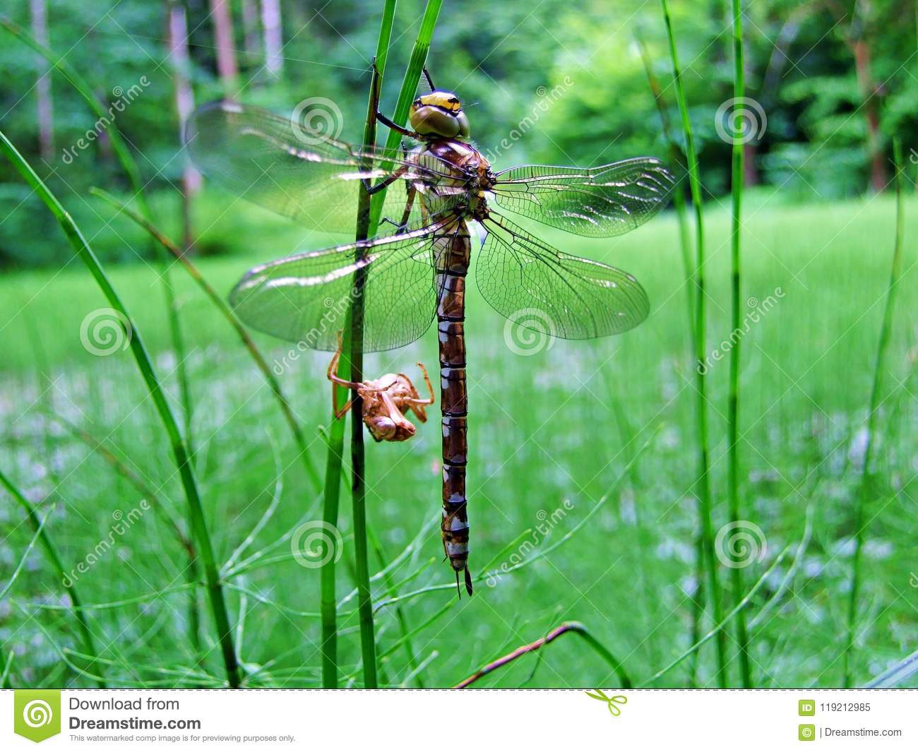 dragonfly, insect, nature, macro, wings, animal, bug, green, wildlife, fly, wing, damselfly, closeup, fauna, grass, close-up, red