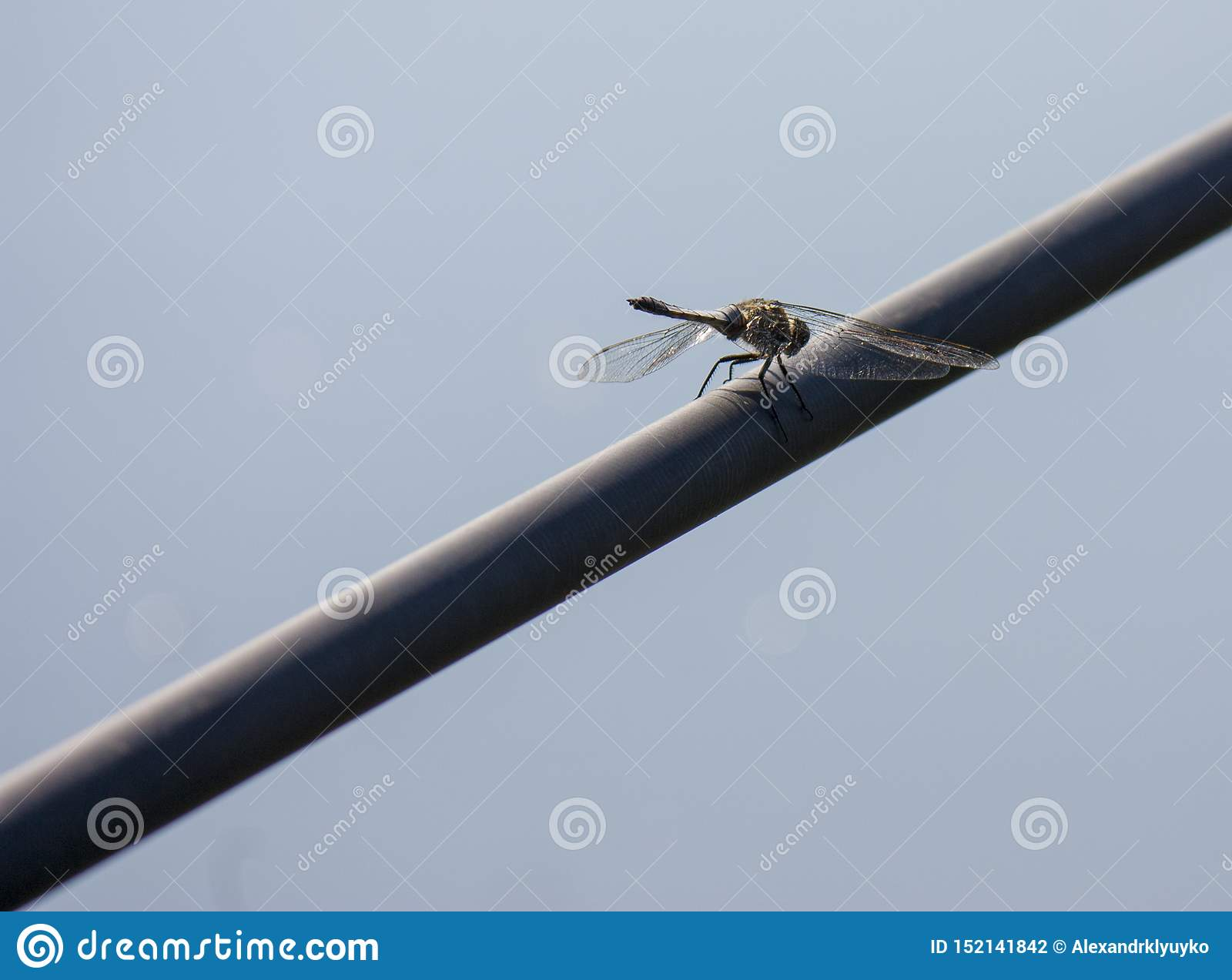 Dragonfly in nature. Close-up of Dragonfly in its natural habitat. Beautiful vintage nature scene with dragonfly outdoor