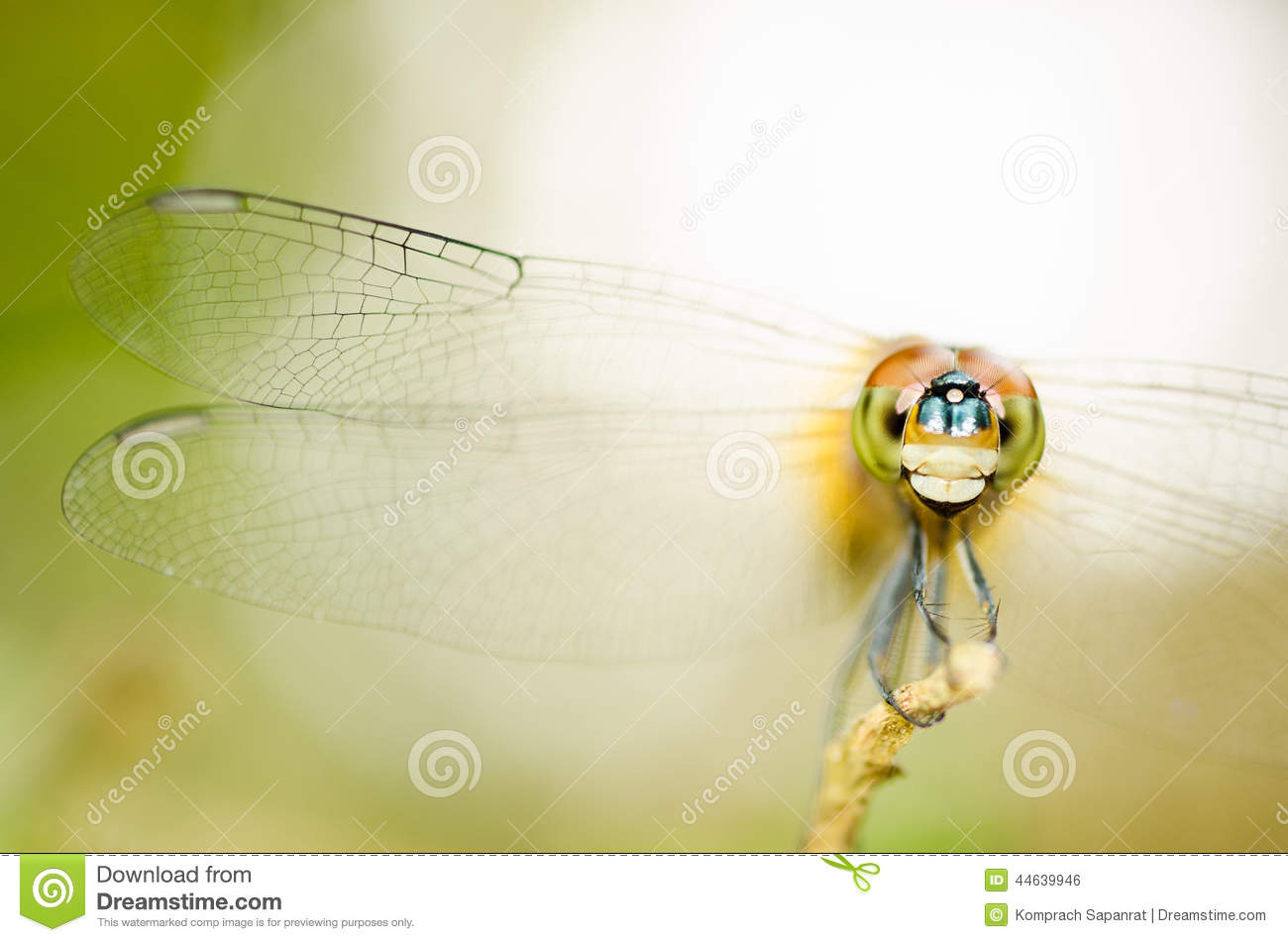Download Dragonfly. stock photo. Image of eyes, wing, macro, background - 44639946