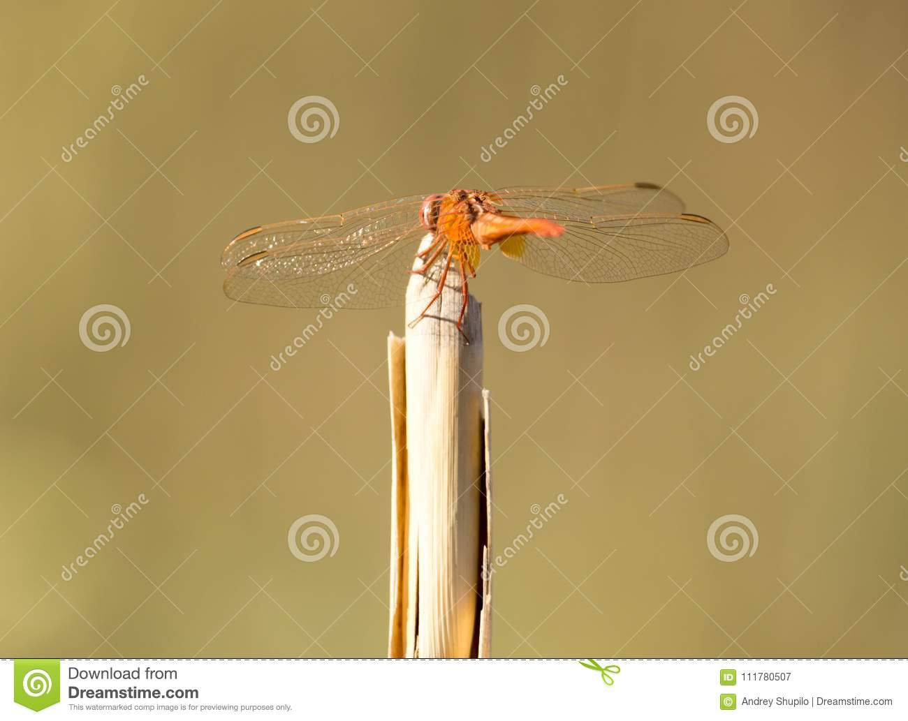 Dragonfly on a stick outdoors