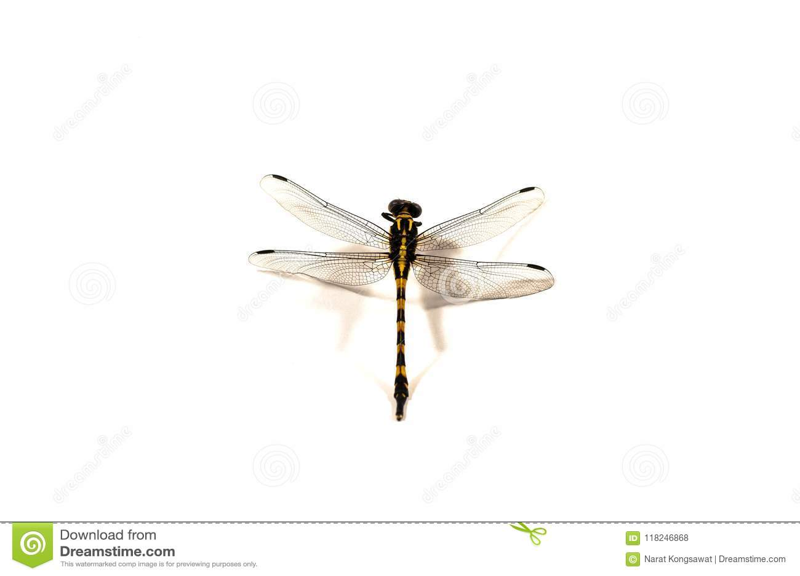 Dragonfly, white background