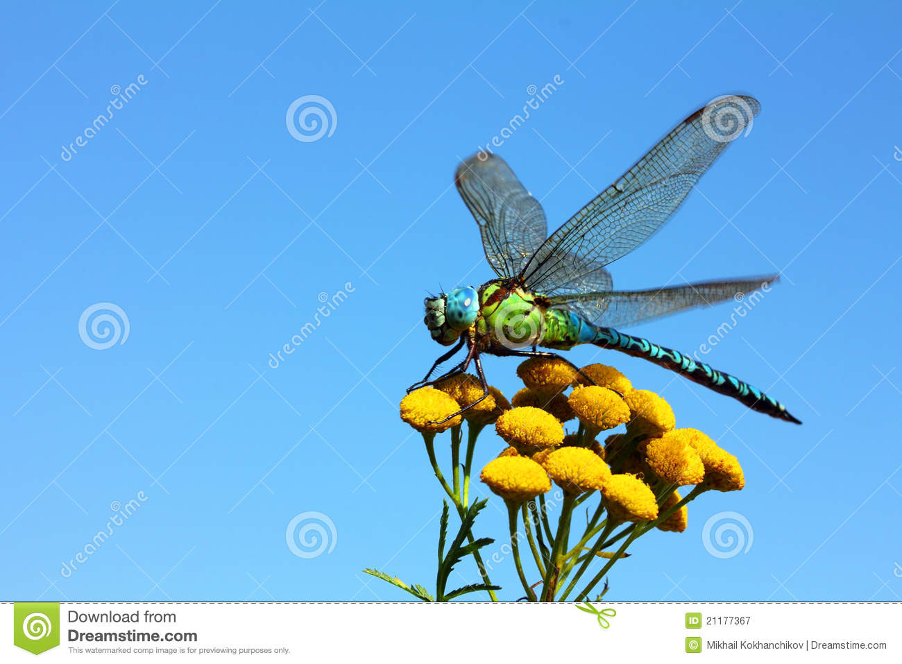 Dragonfly On Yellow Flower Royalty Free Stock Photography - Image ...