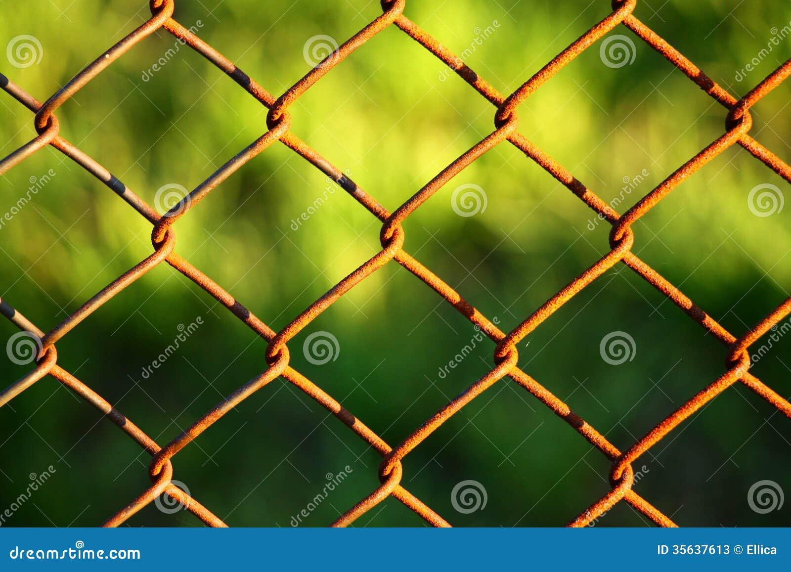 Drahtzaun Mit Grün Im Hintergrund Stockfotos Bild