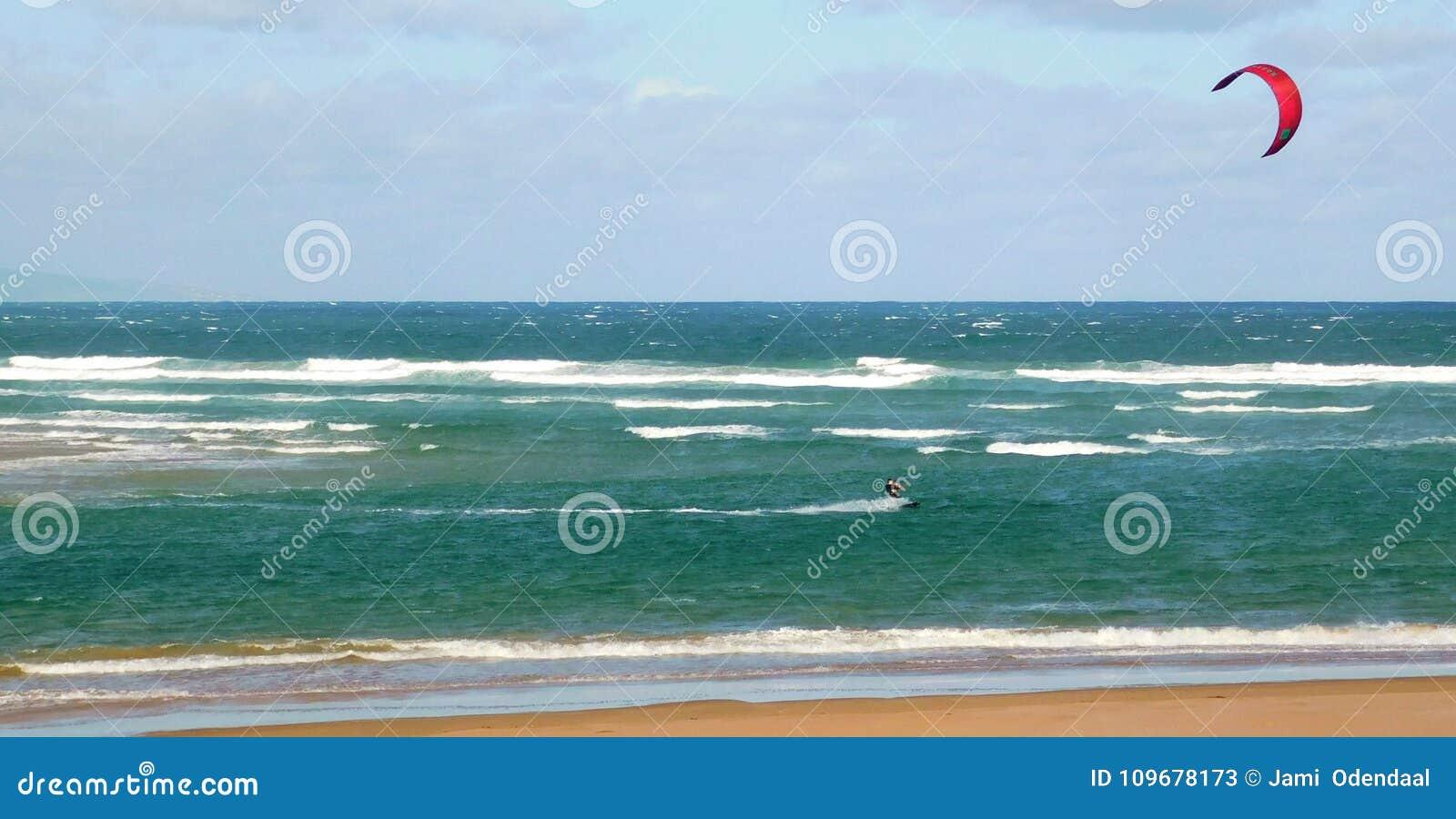 Drake som surfar av kust