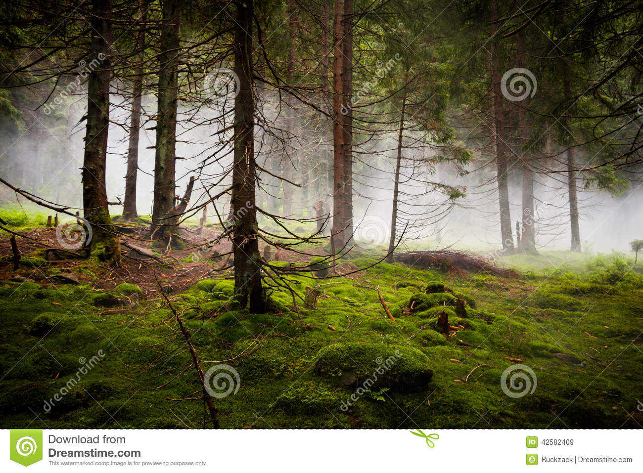 Dramatic Forest with Fog