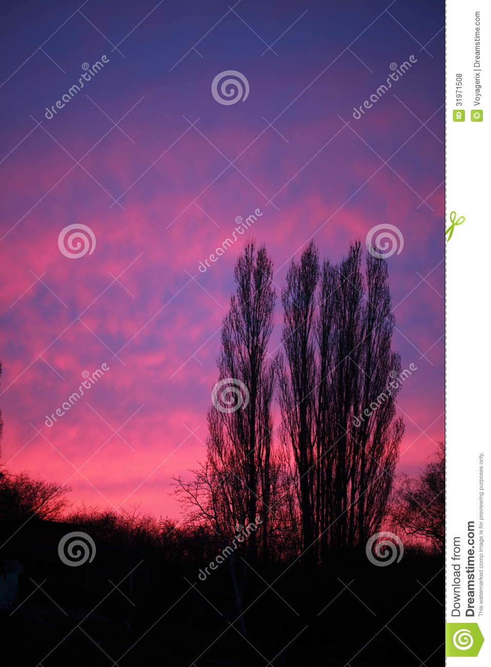 Dramatic Pink Eye Makeup: Dramatic Pink Sky And Trees Sunset Or Sunrise Royalty Free