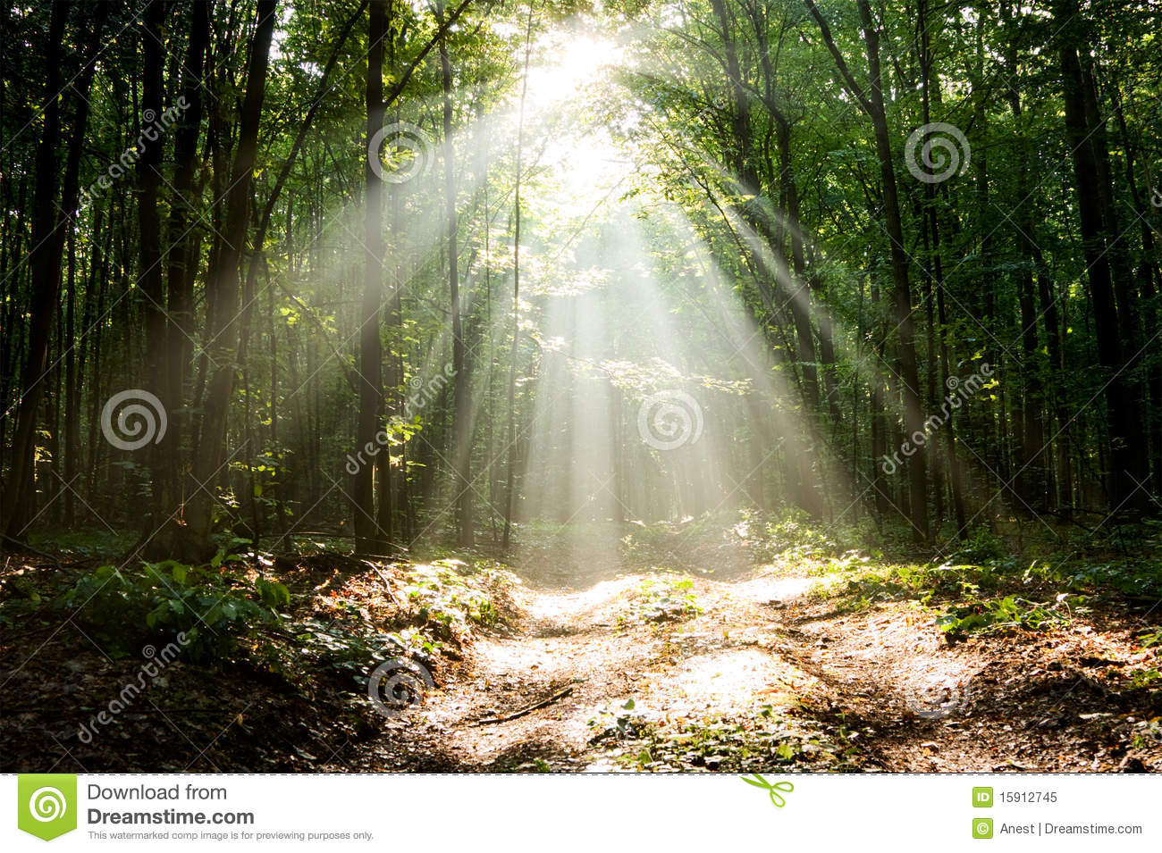Dramatic Sunlight In Morning Woods Royalty Free Stock