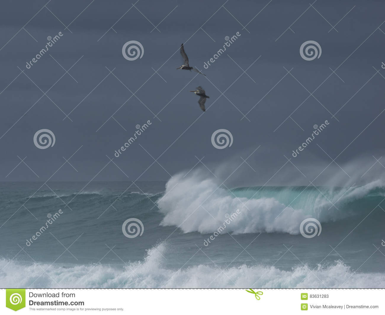 Dramatic waves with pelicans