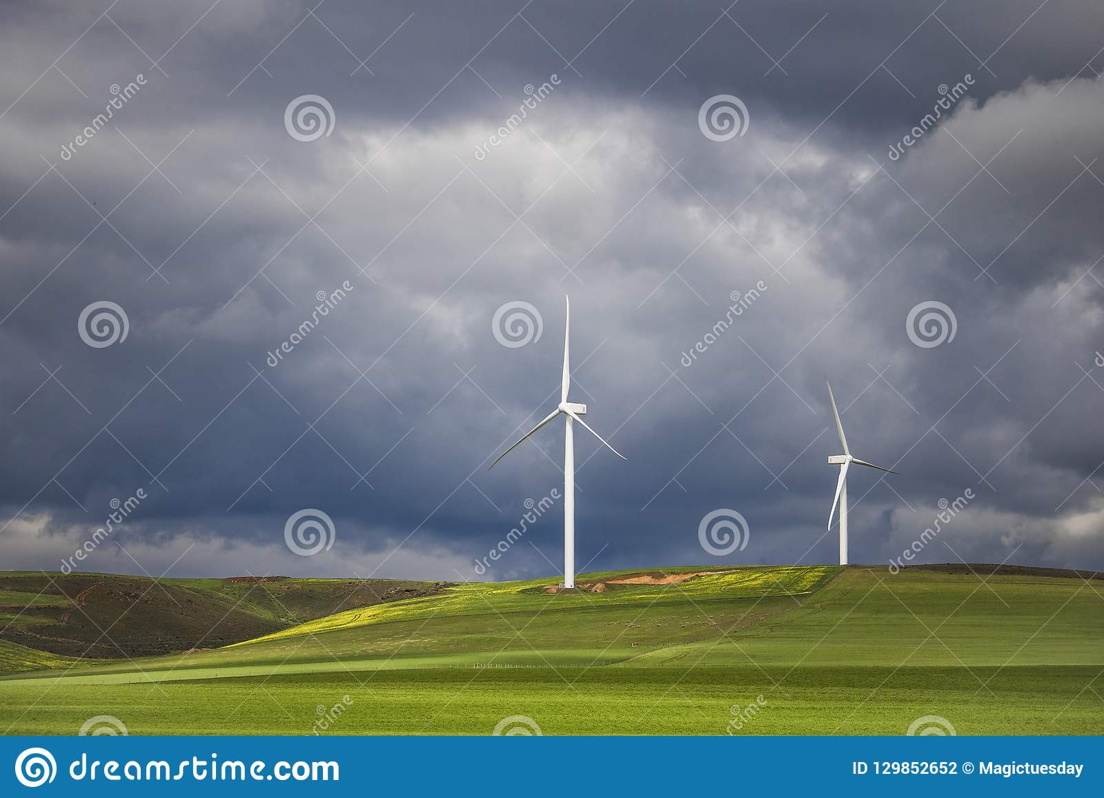 Dramatyczna burza nad silnikami wiatrowymi w zieleni polach - Caledon, Zachodni przylądek, Południowa Afryka
