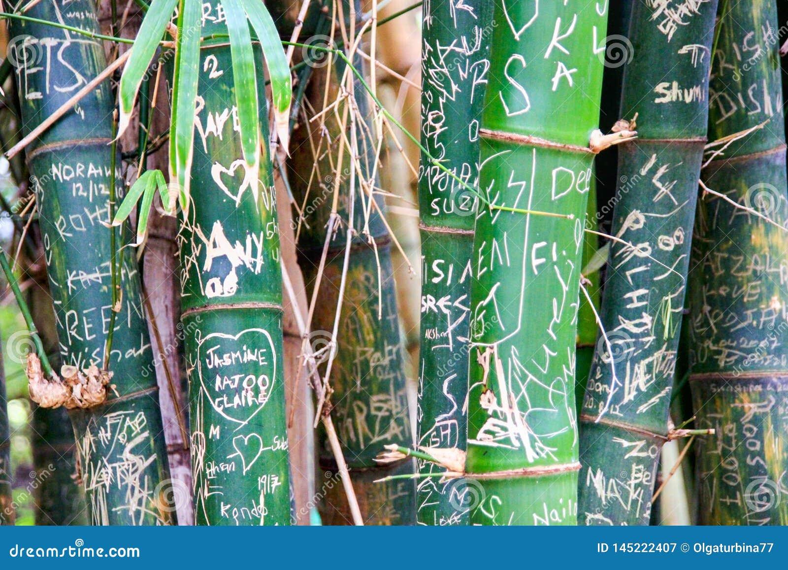 Drapaj?cy za listach i inicja?ach na zielonych bambusowych baga?nikach