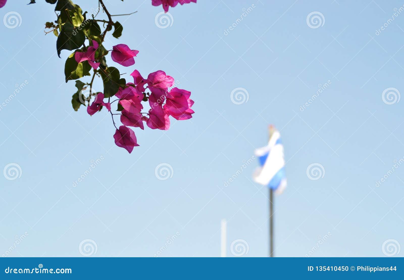 Drapeau national israélien ondulant au bâti de l olive à Jérusalem, Israël avec les feuilles colorées d arbre dans l avant