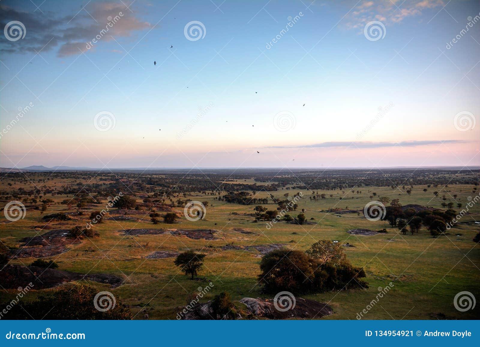 Drastische Sonnenuntergangbeleuchtung über der Serengeti-Savanne von übersehen