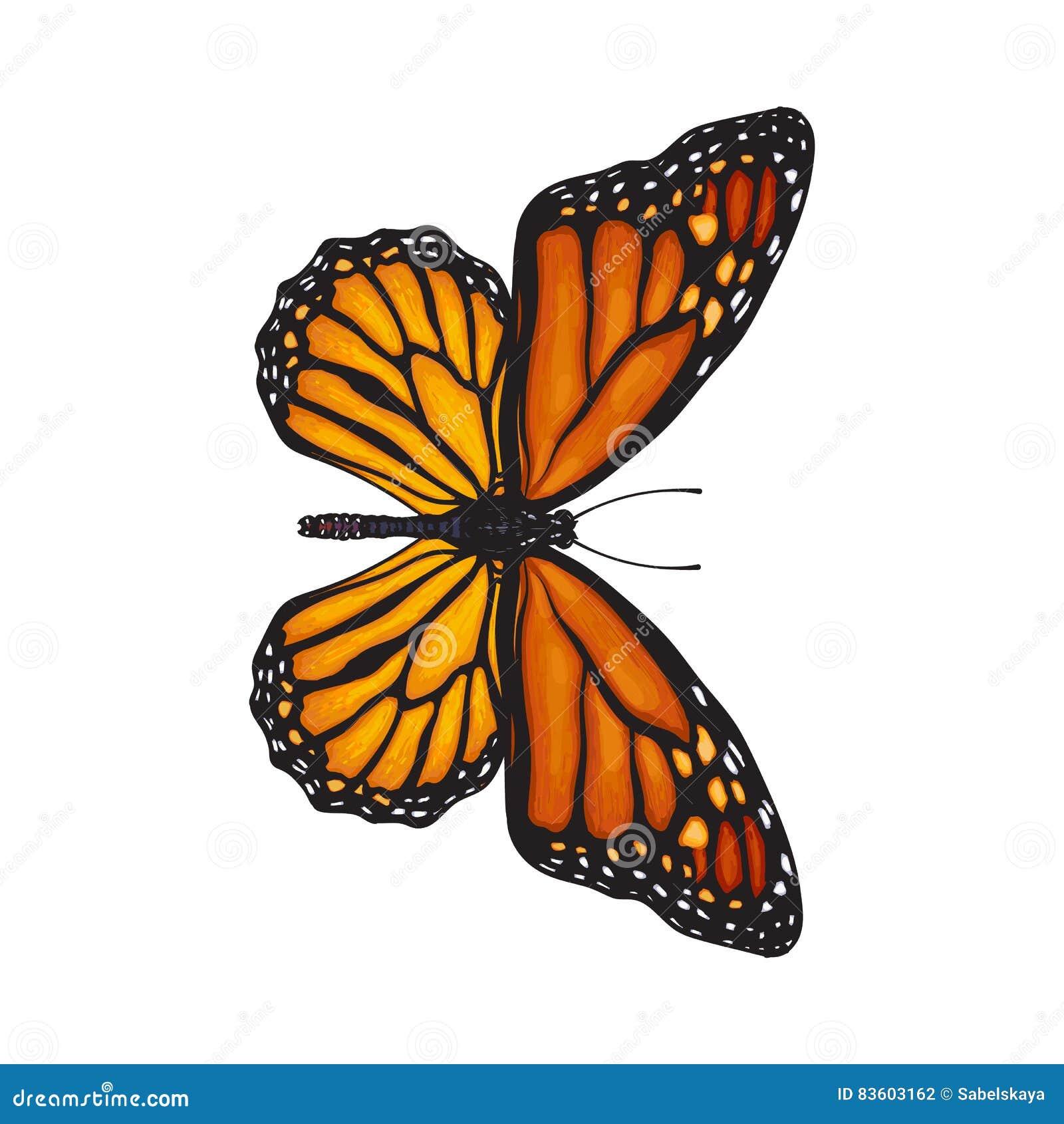 Draufsicht des schönen Monarchfalters, lokalisierte Skizzenartillustration