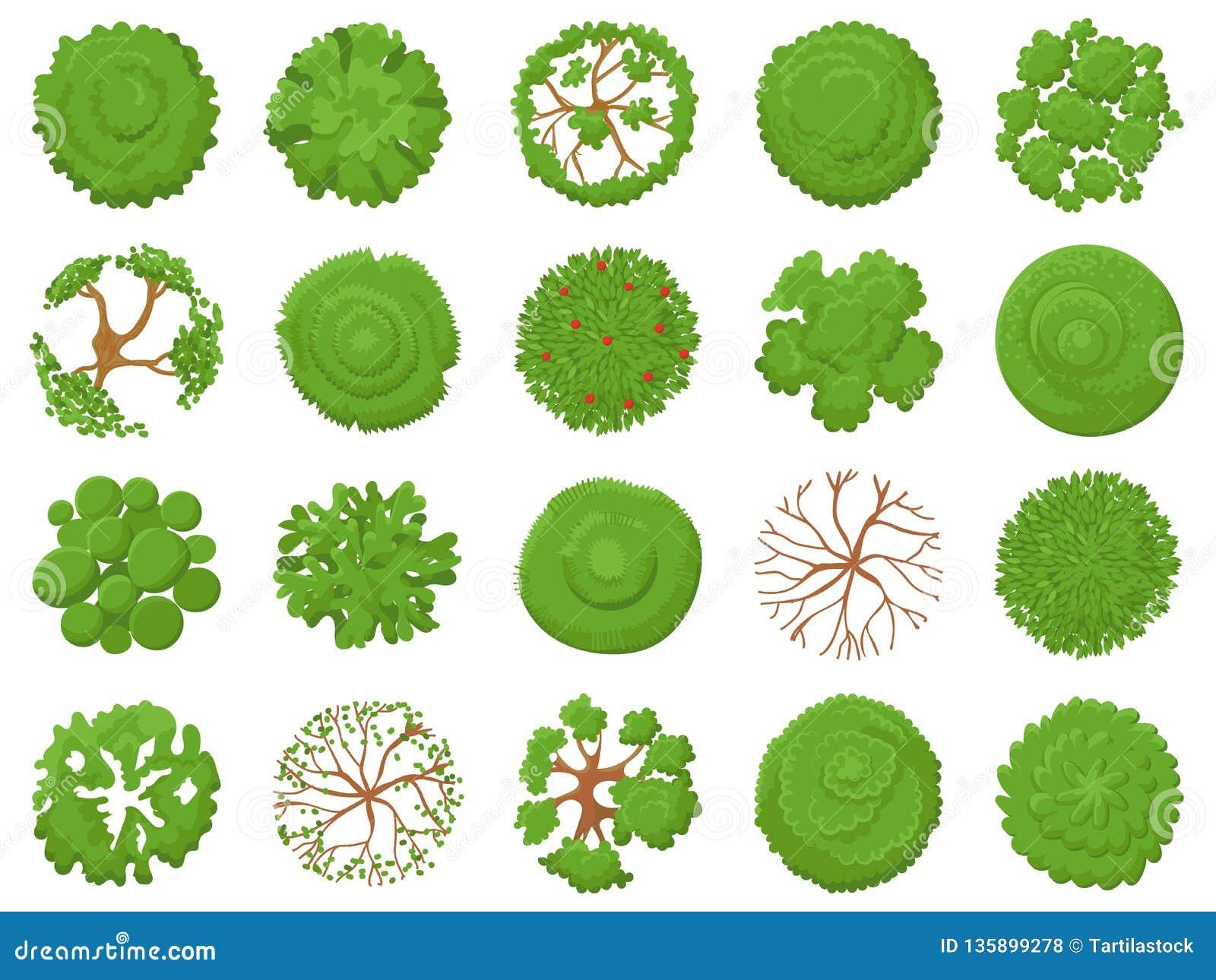 Draufsichtbaum Pflanzen von den grünen Bäumen, von Parkkartenvegetation und von tropischen Waldkarten, die von der oben genannten