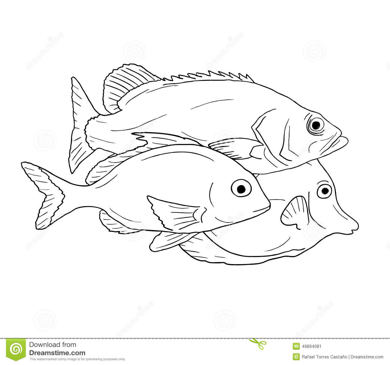Draw Fish How To Draw A