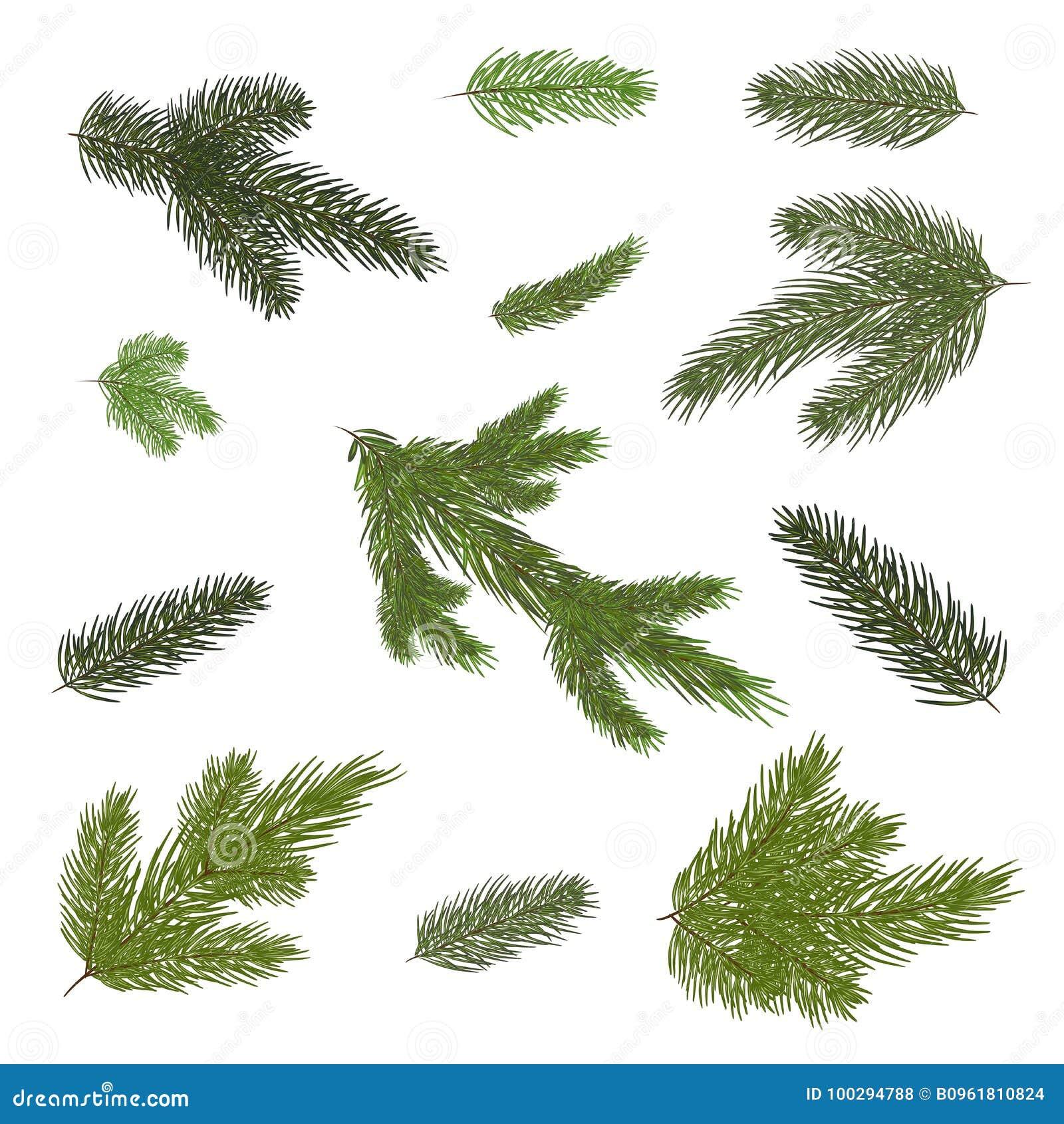 Draw verschiedene Niederlassungen eines Tannenbaums Getrennt Nahaufnahme