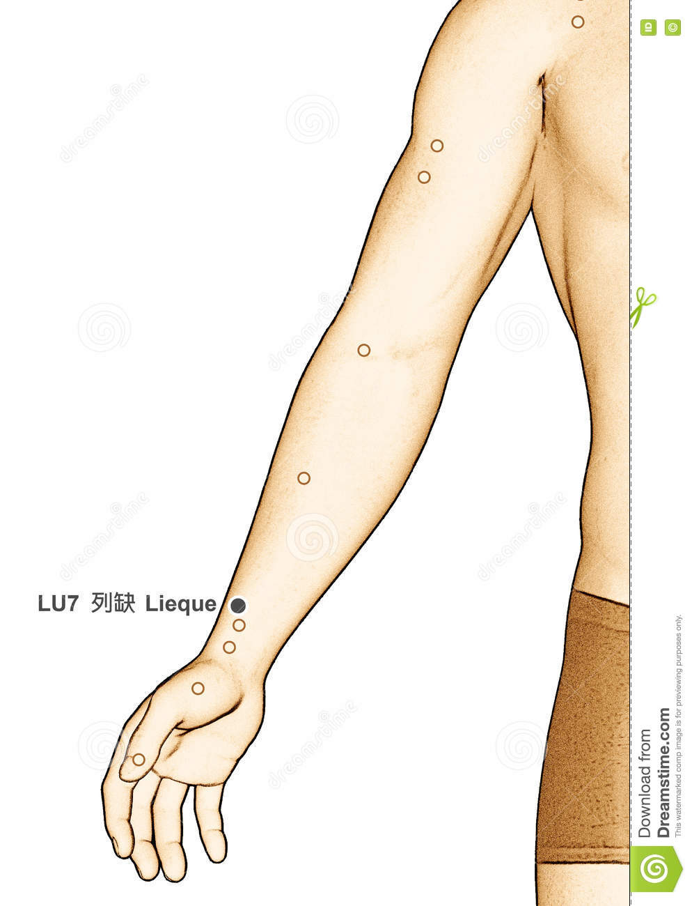 Drawing Acupuncture Point LU7 Lieque, 3D Illustration Stock