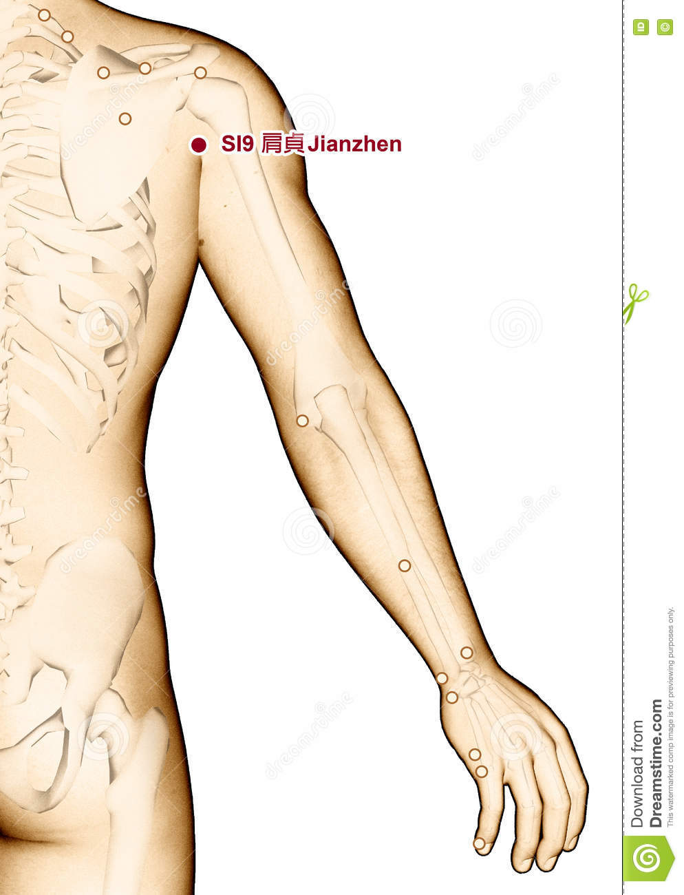 Drawing Acupuncture Point SI9 Jianzhen, 3D Illustration Stock