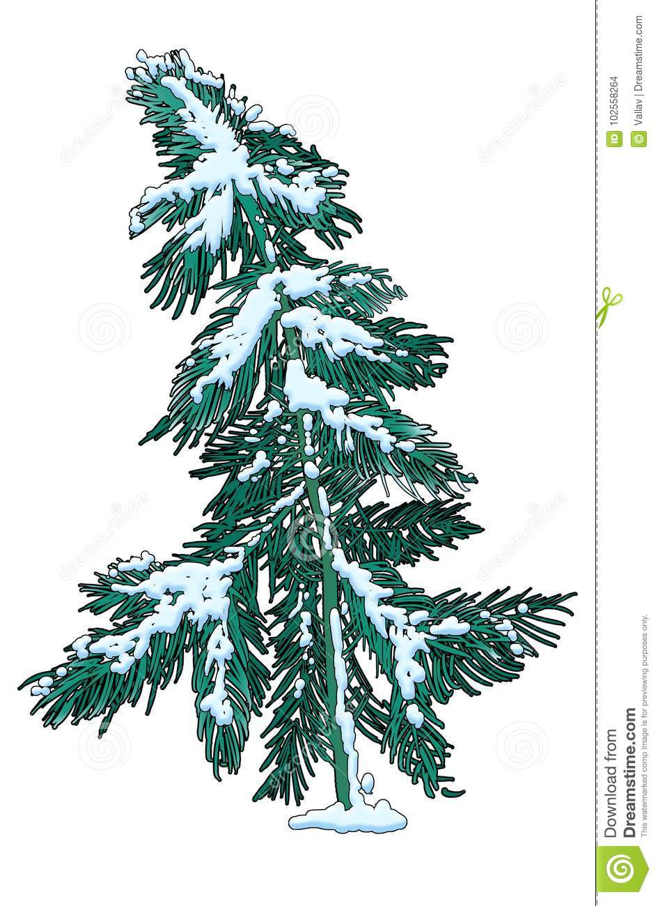 Snow-covered Pine Tree, Single Object Stock Illustration ...