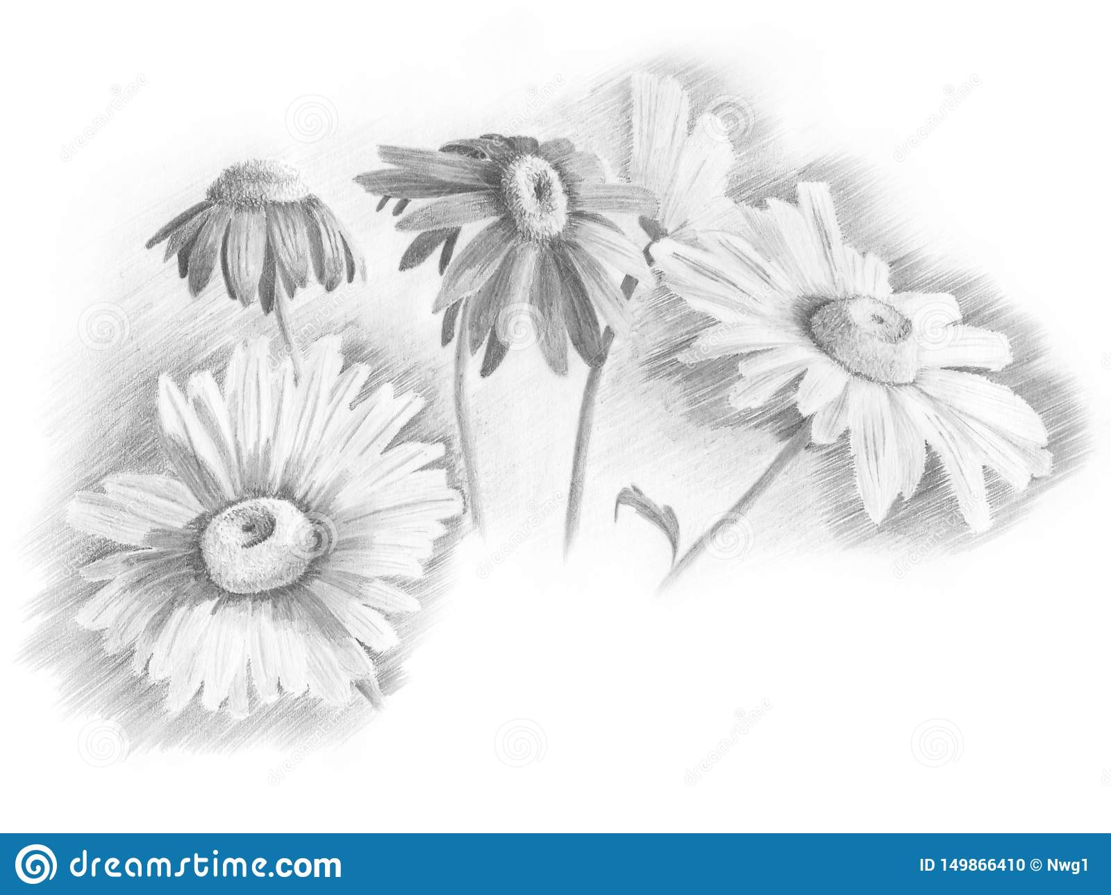 Drawing five daisies in the sun stock illustration illustration of