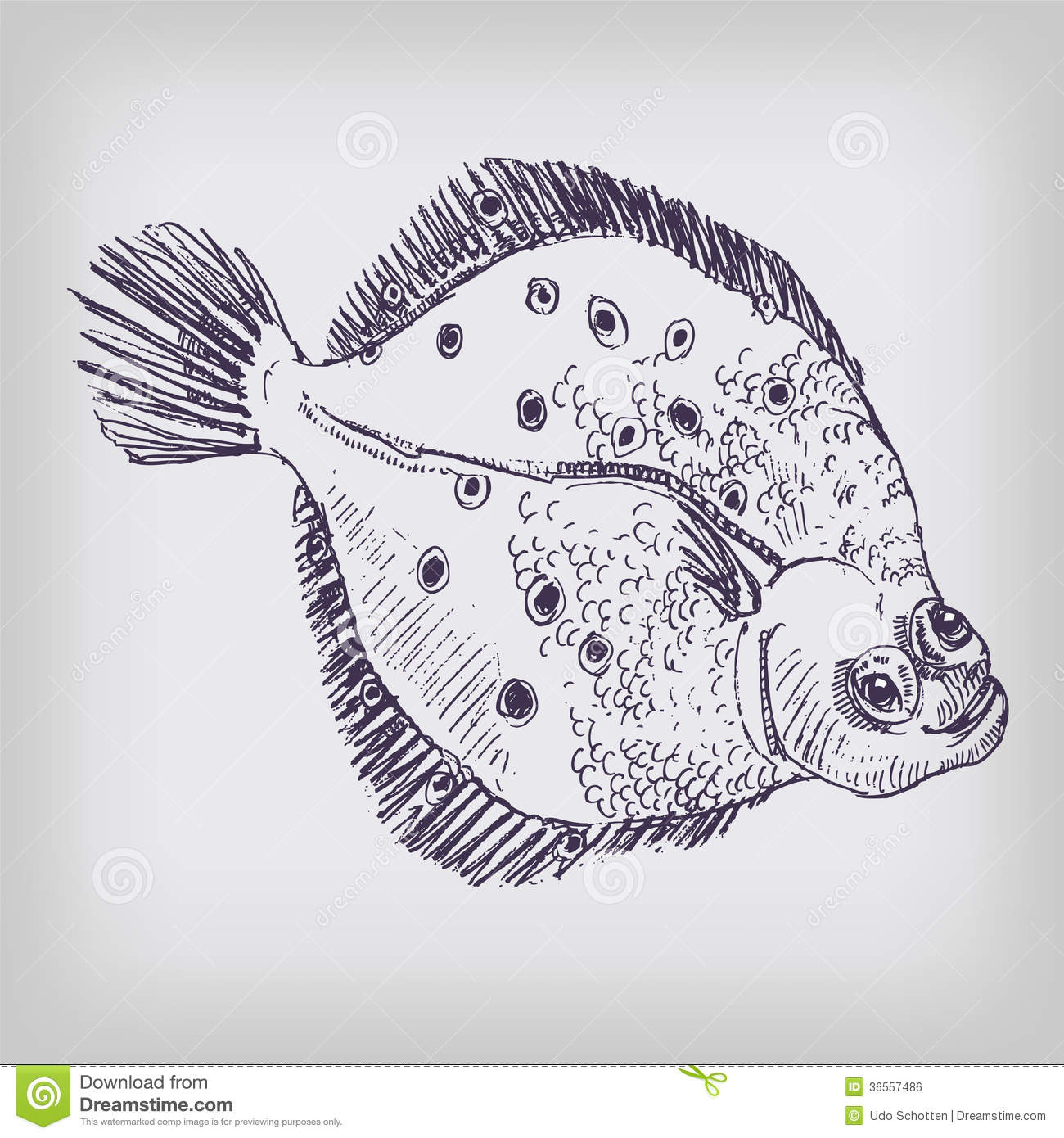Drawing Of A Flounder Royalty Free Stock Image - Image ...