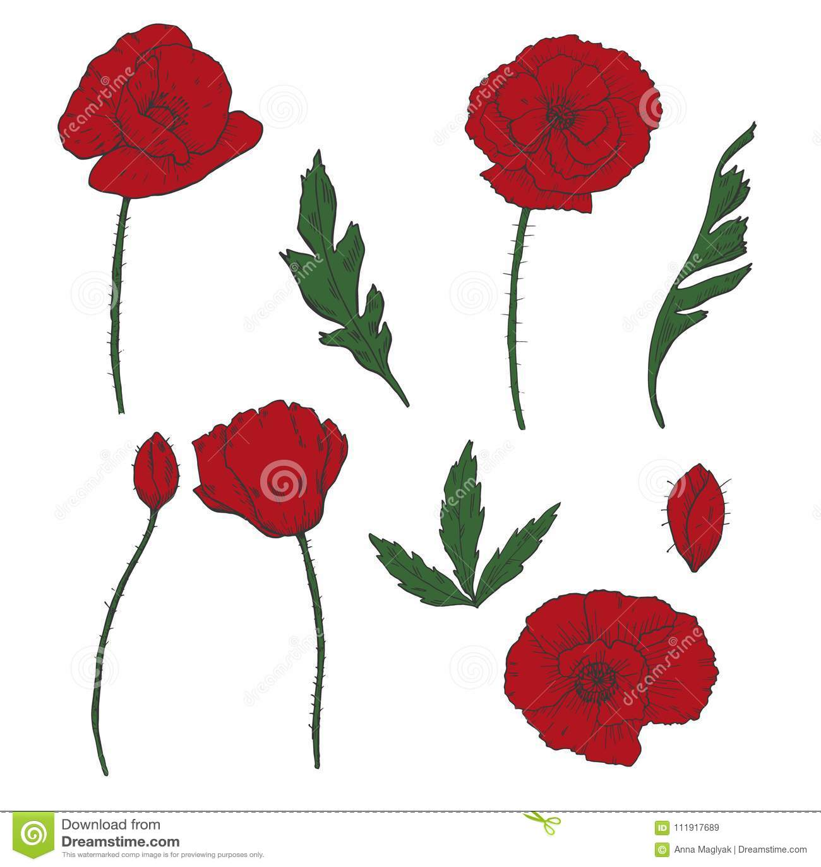 Drawing Flowers Poppy Flower Clip Art Stock Vector Illustration