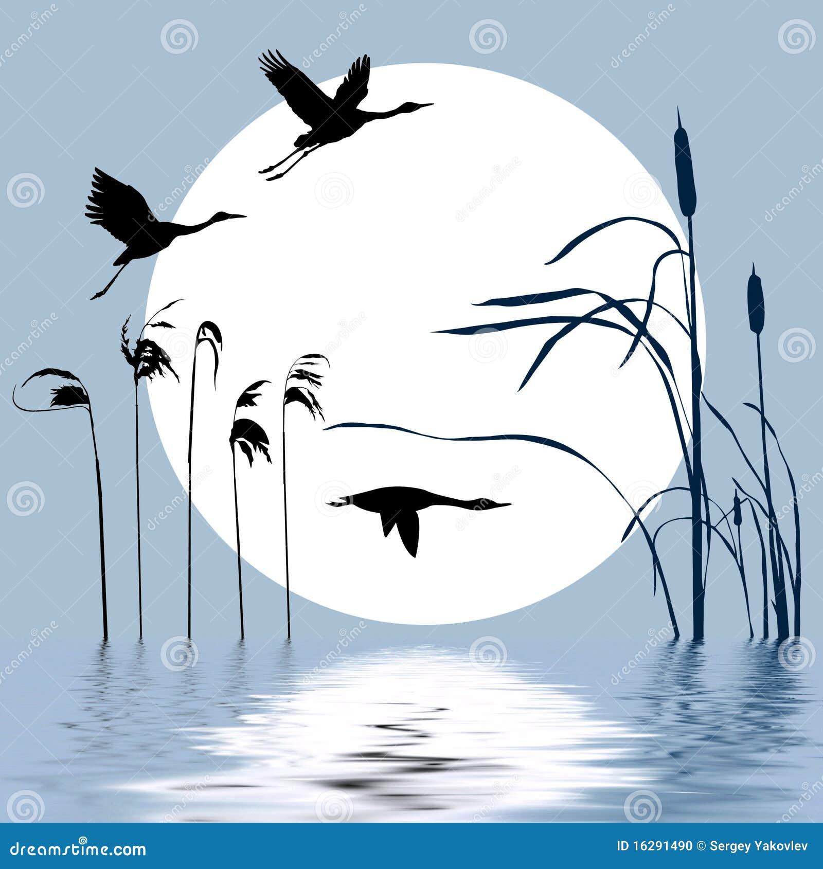 Drawing Flying Birds Stock Photo Image 16291490