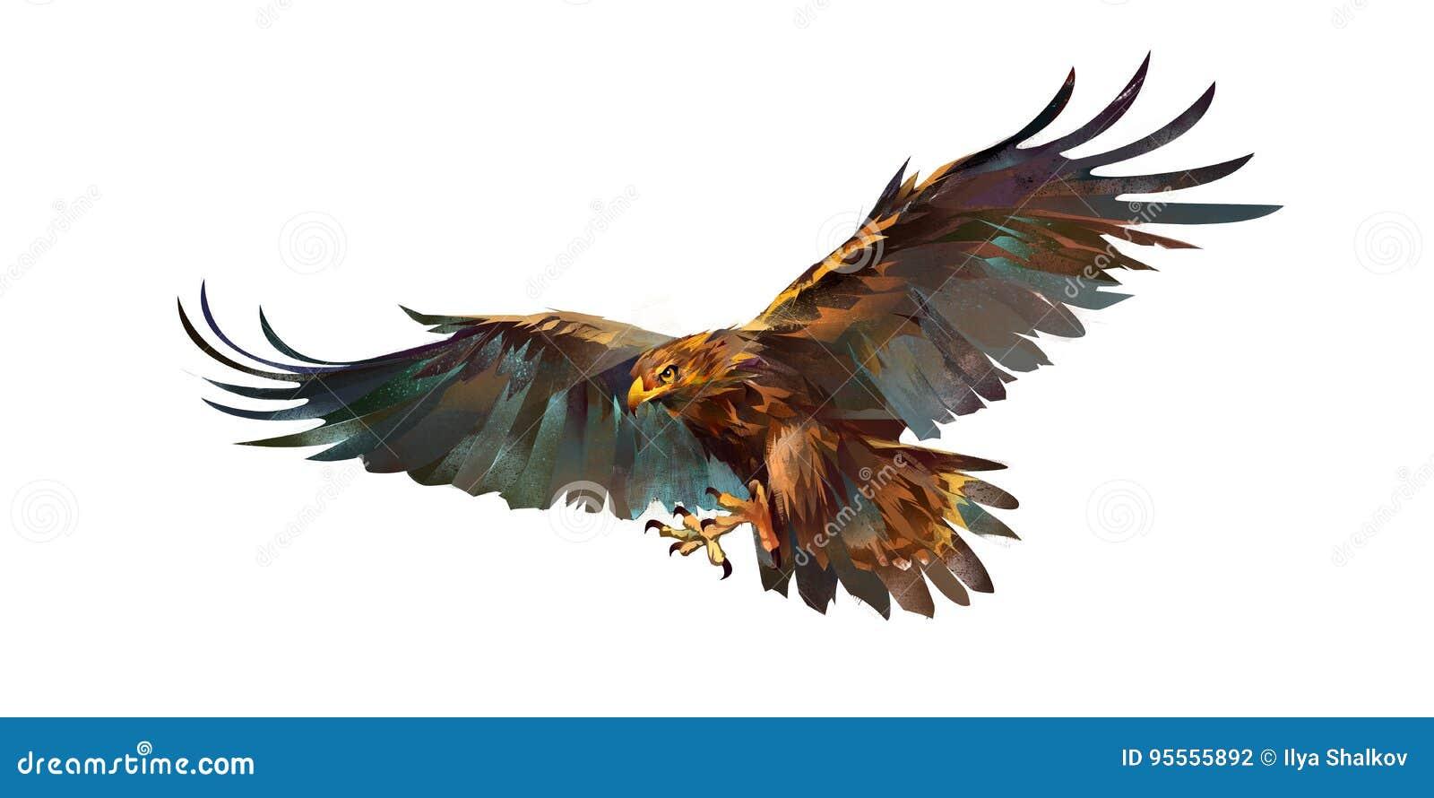 drawing flying eagle on white background stock illustration