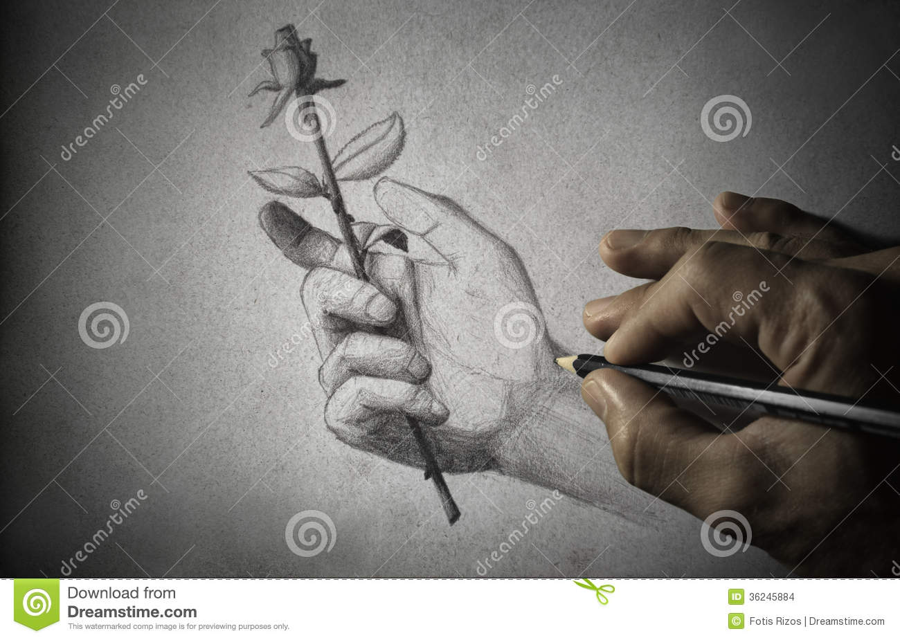 Drawing stock images image 36245884 for Hand holding a rose drawing