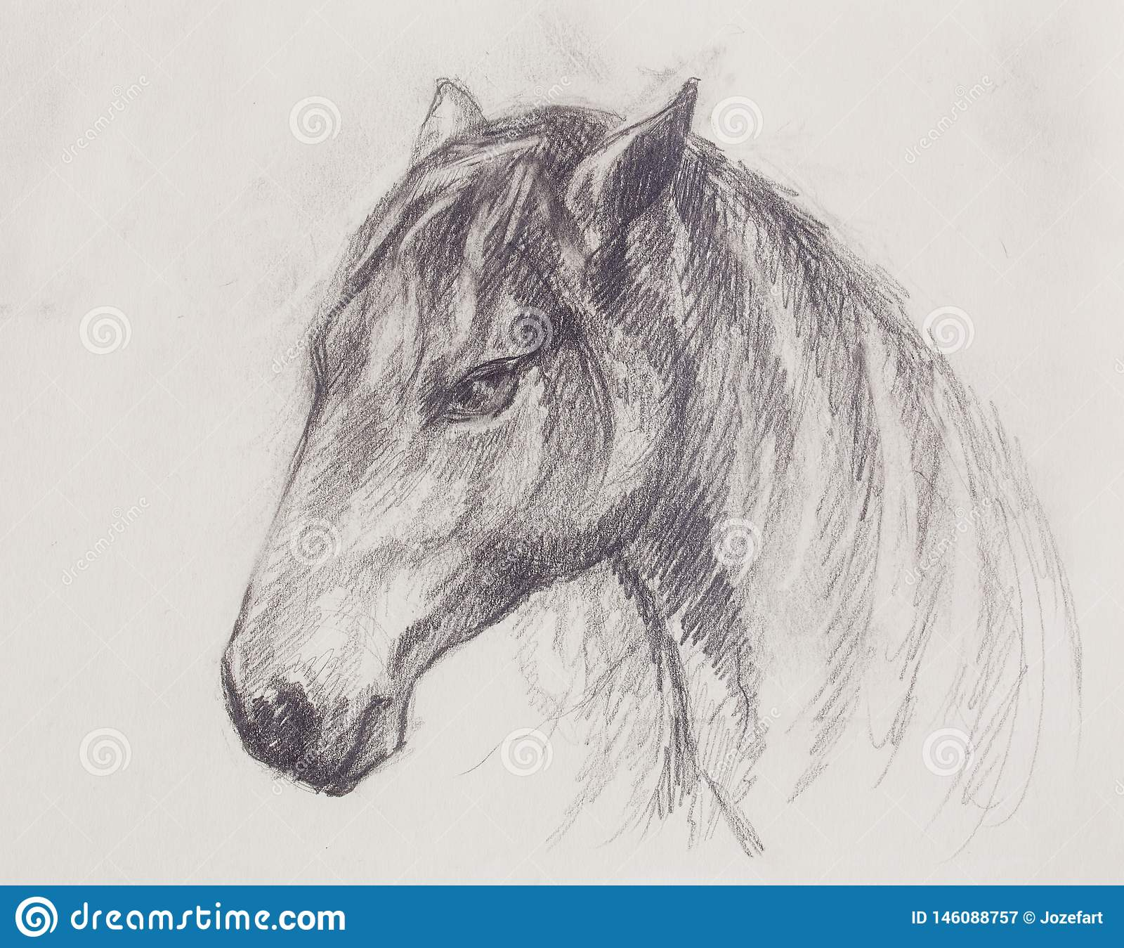 Drawing Horse On Old Paper Original Hand Draw Stock Illustration Illustration Of Horse Freedom 146088757