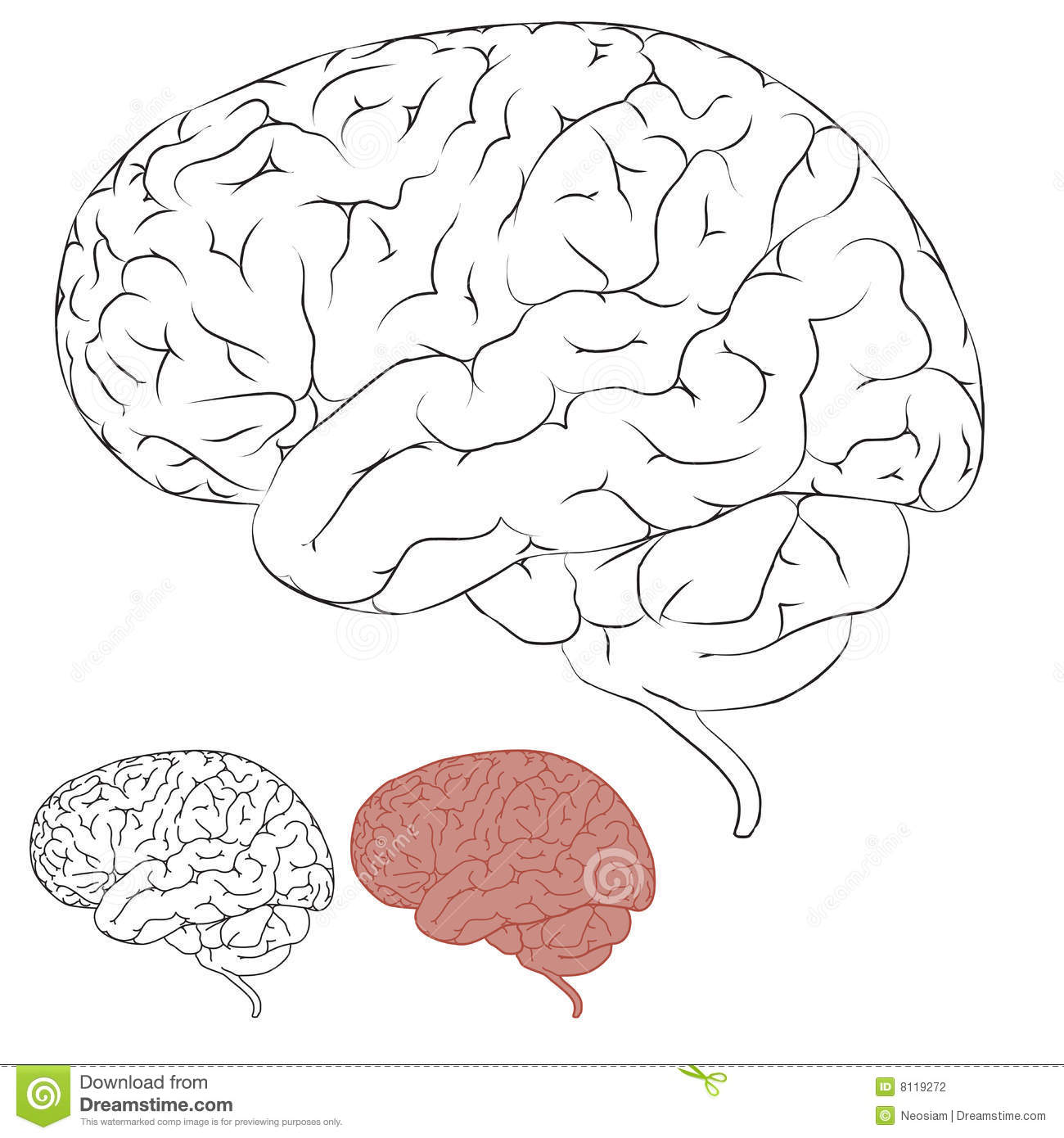 Line Drawing Brain : Drawing human brain stock photography image
