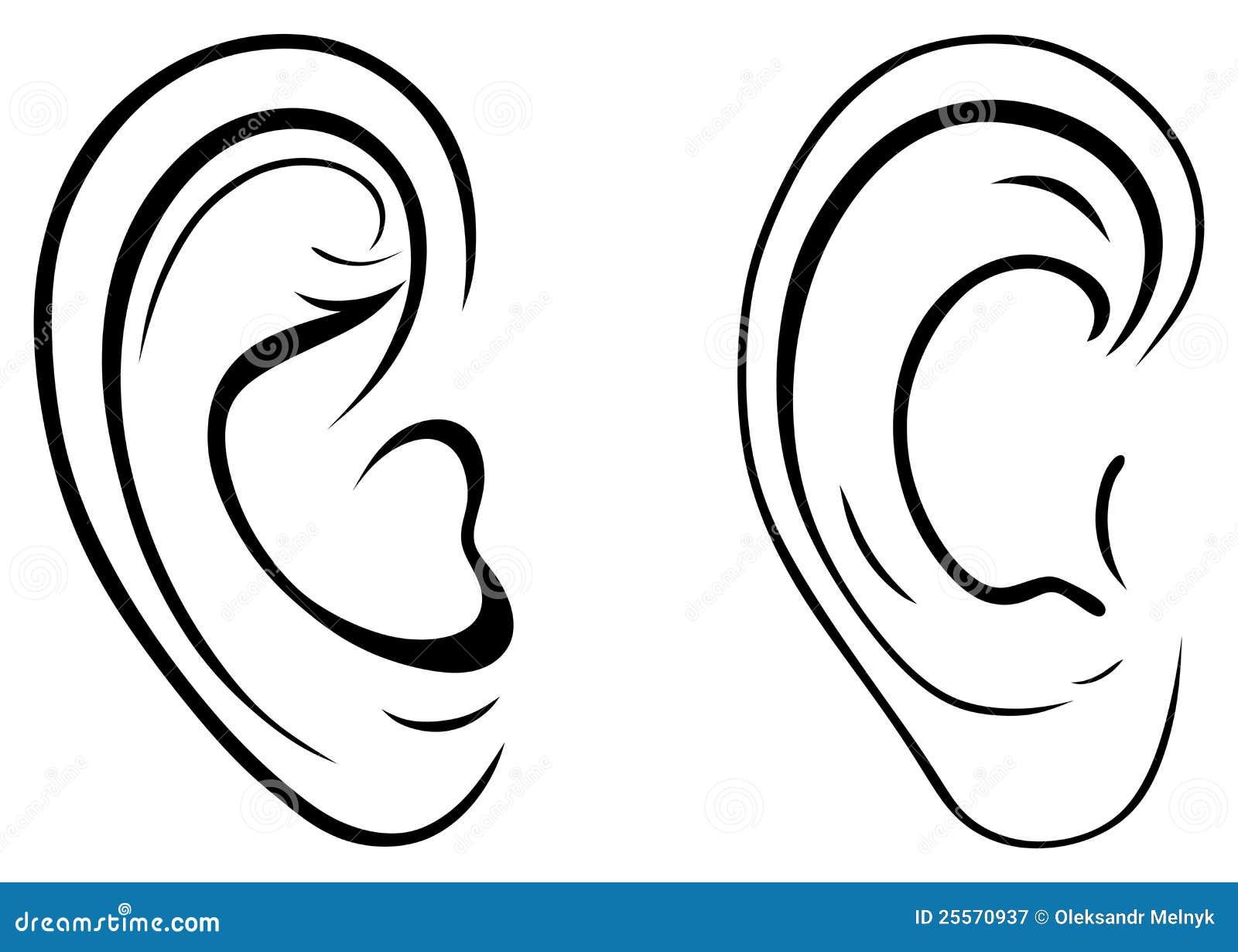 Drawing Human Ear Royalty Free Stock Photography Image 25570937