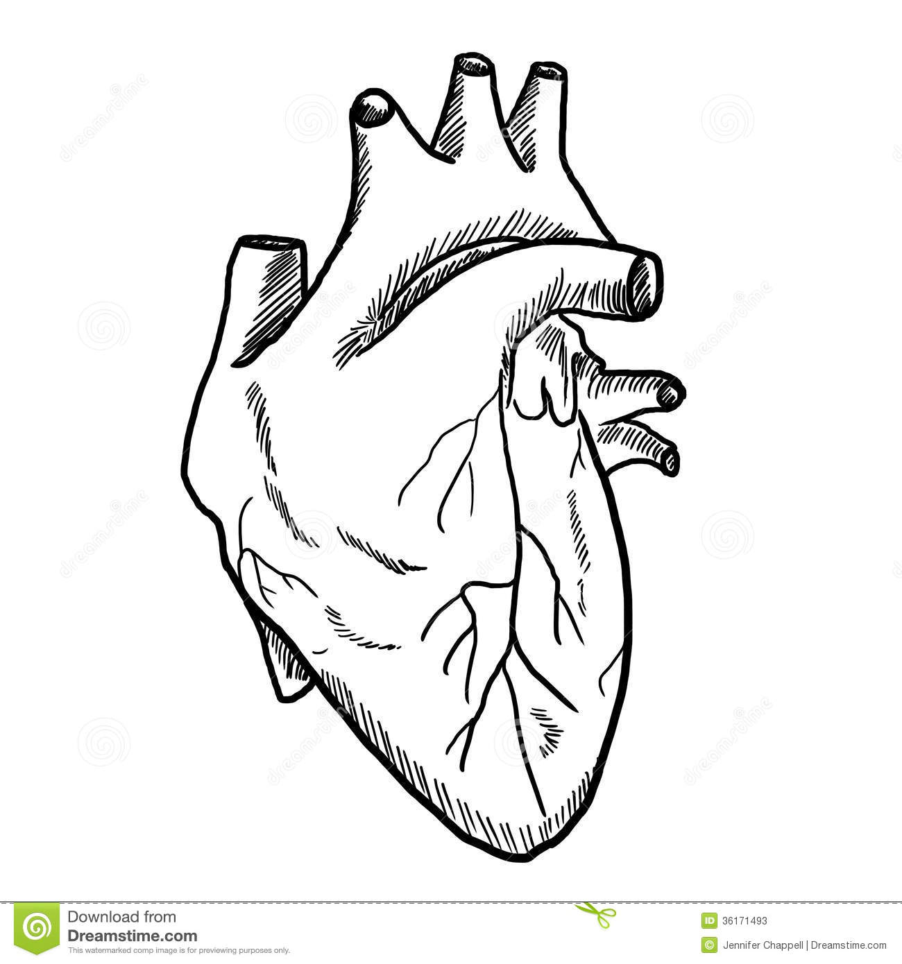Drawing of Human Heart Human Heart Drawing Black And White