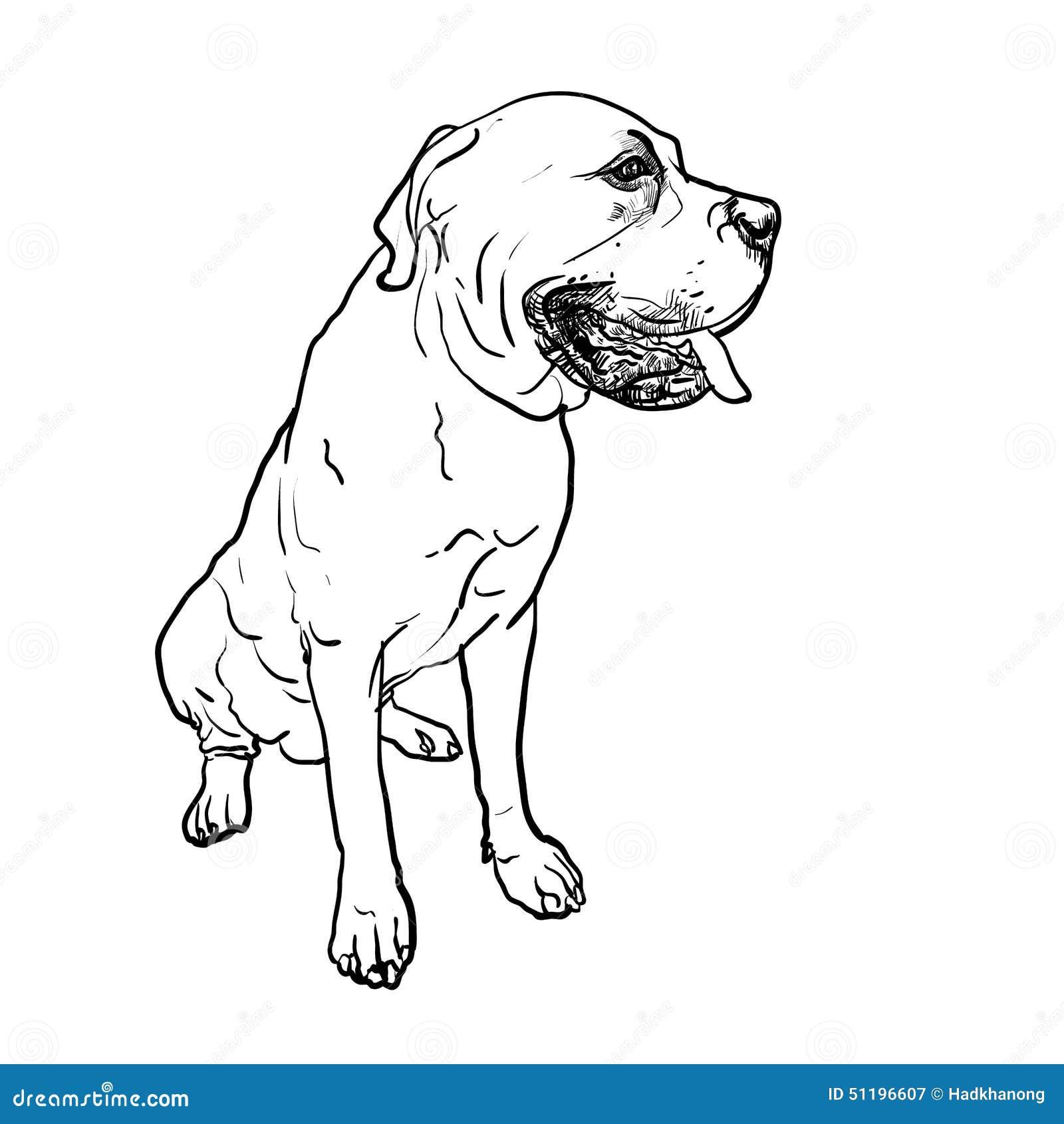Drawing Of Mastiff Dog On Sitting Pose Stock Vector ...