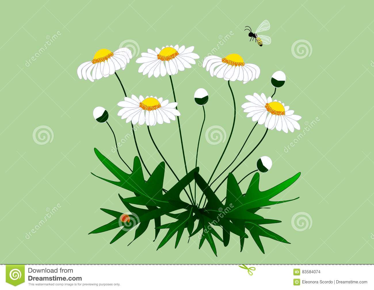 Drawing Of A Plant Of Daisies With Flowers Stock Illustration