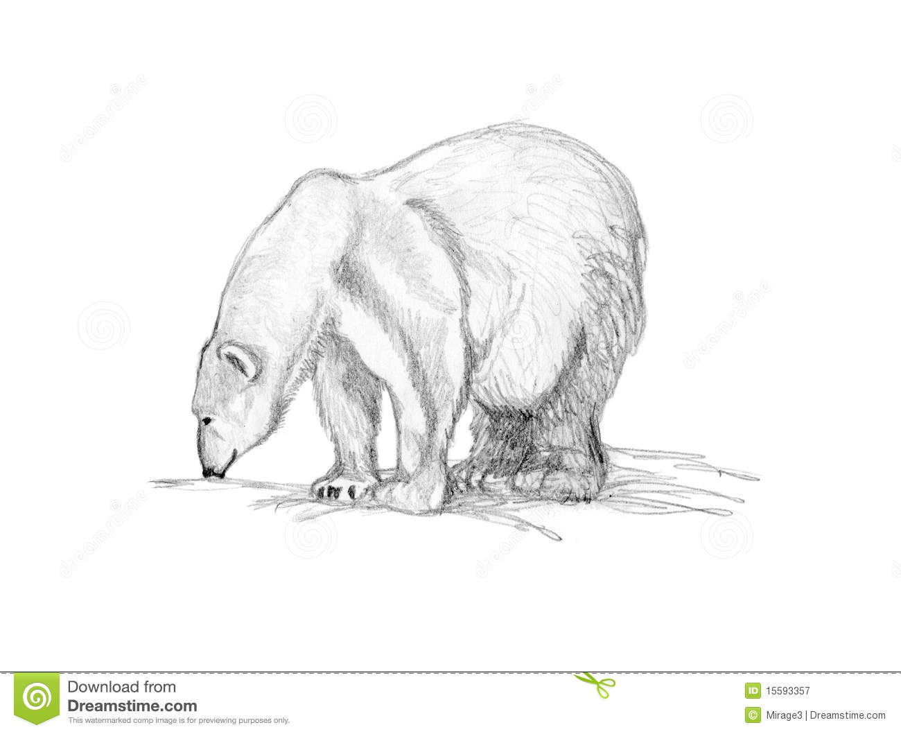 drawing polar bear sniffing royalty free stock photography image