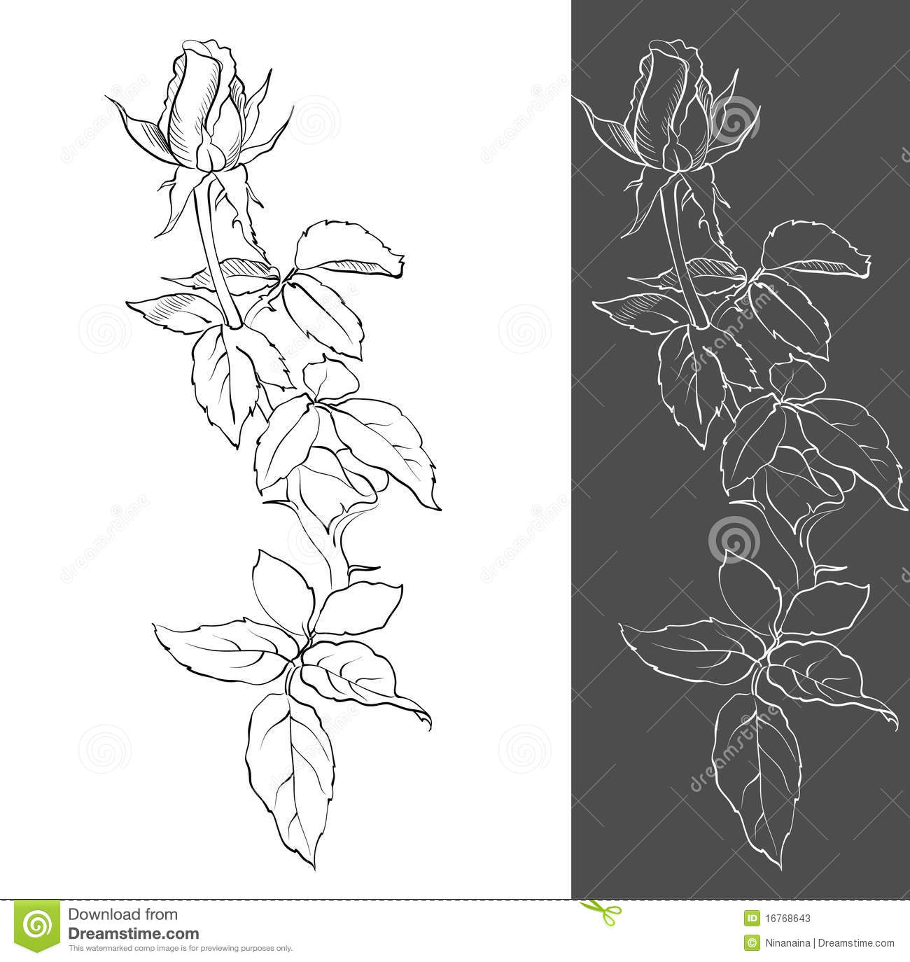 Drawing A Rosebud Stock Vector. Image Of Graphic, Leaf