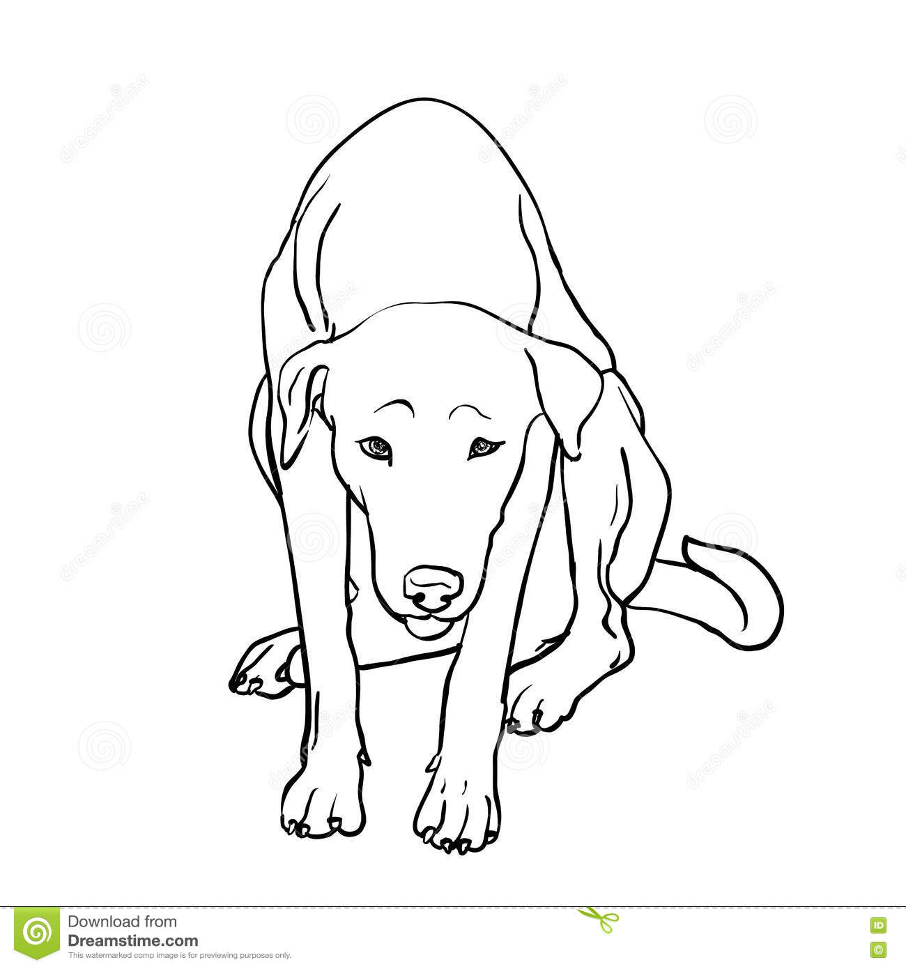Drawing of sad stray dog stock vector  Illustration of sketch - 74743942