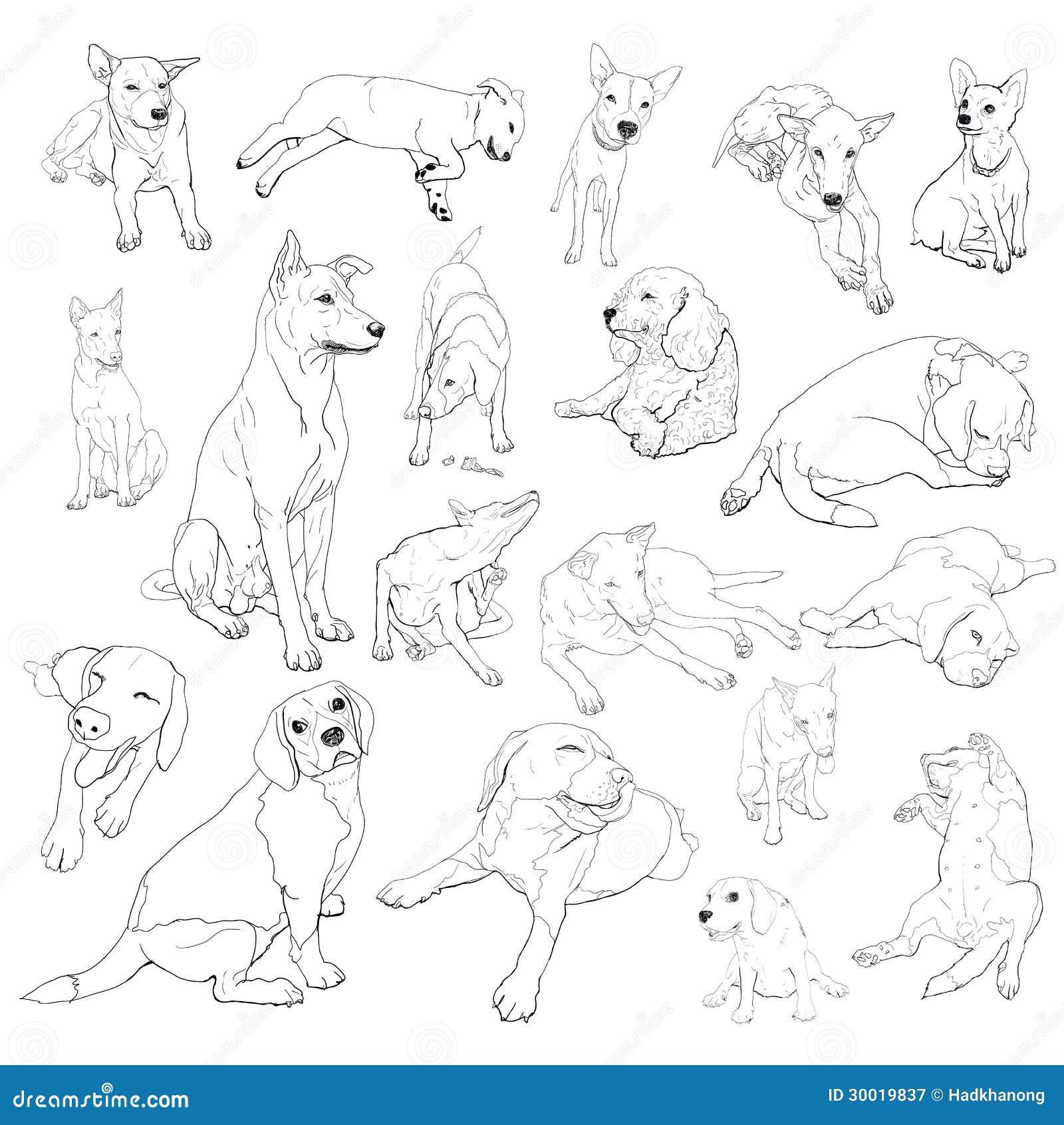 vector set of dogs stock vector  illustration of illustration