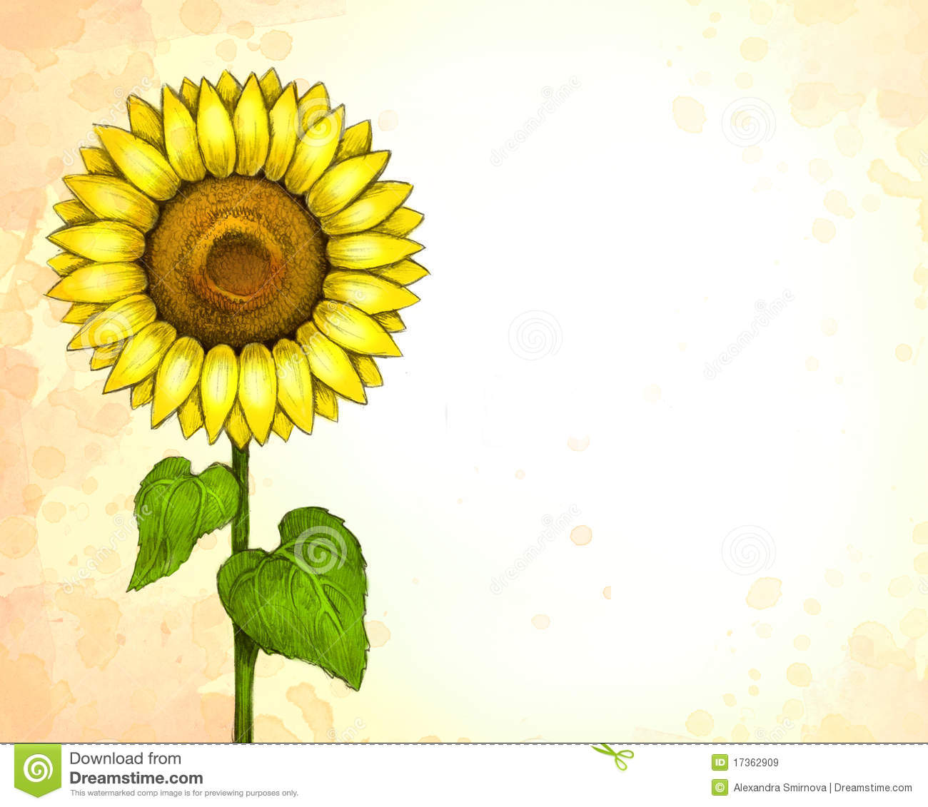 Drawing Of Sunflower Royalty Free Stock Images Image