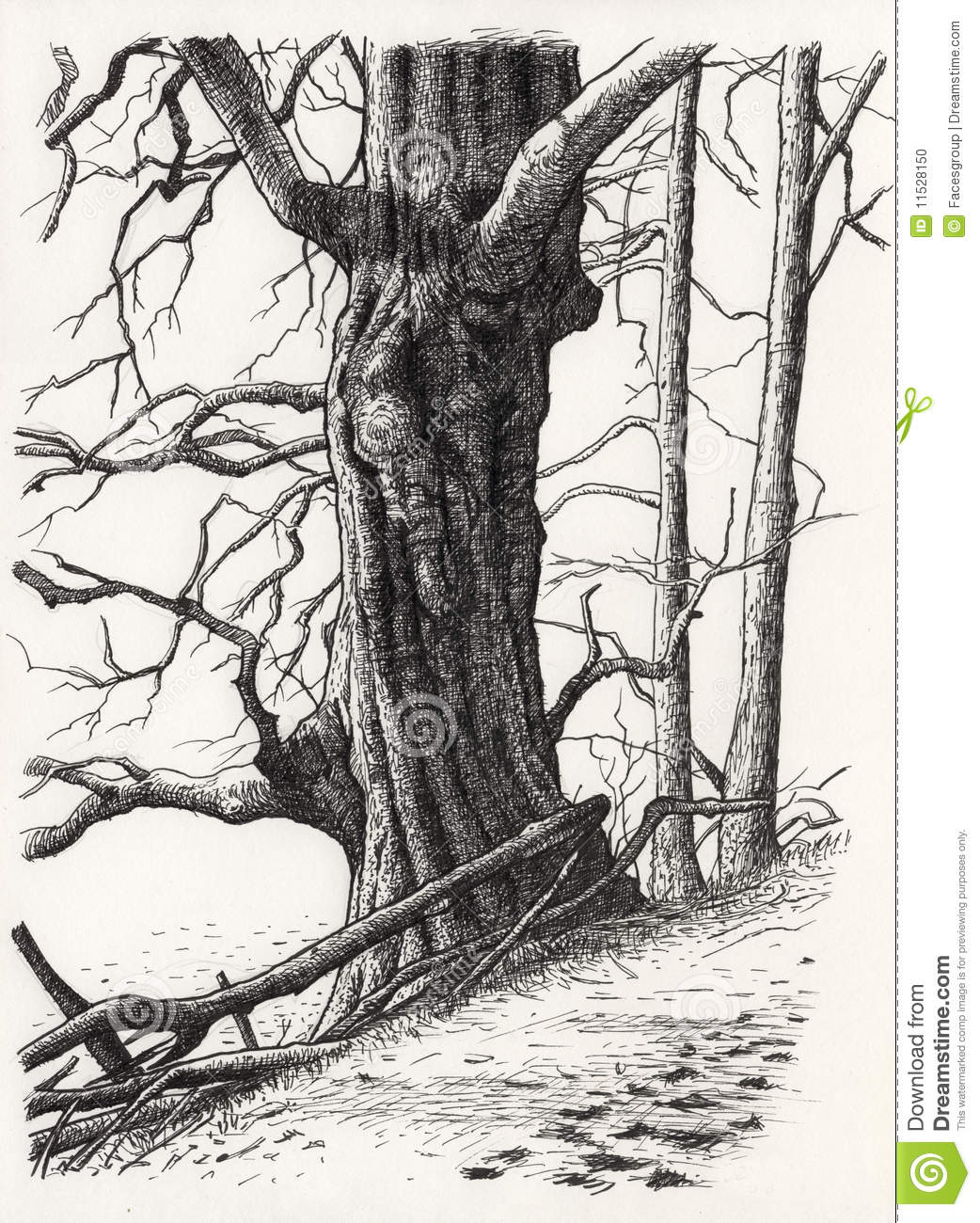 A Drawing Of A Tree Stock Illustration Illustration Of Hatching 11528150