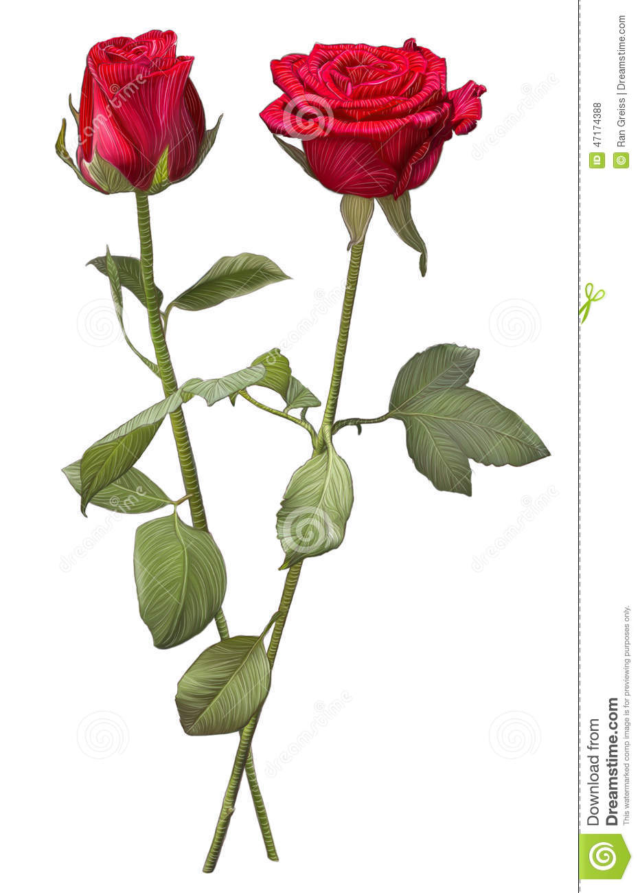 Drawing of two red rose red rose flower drawing
