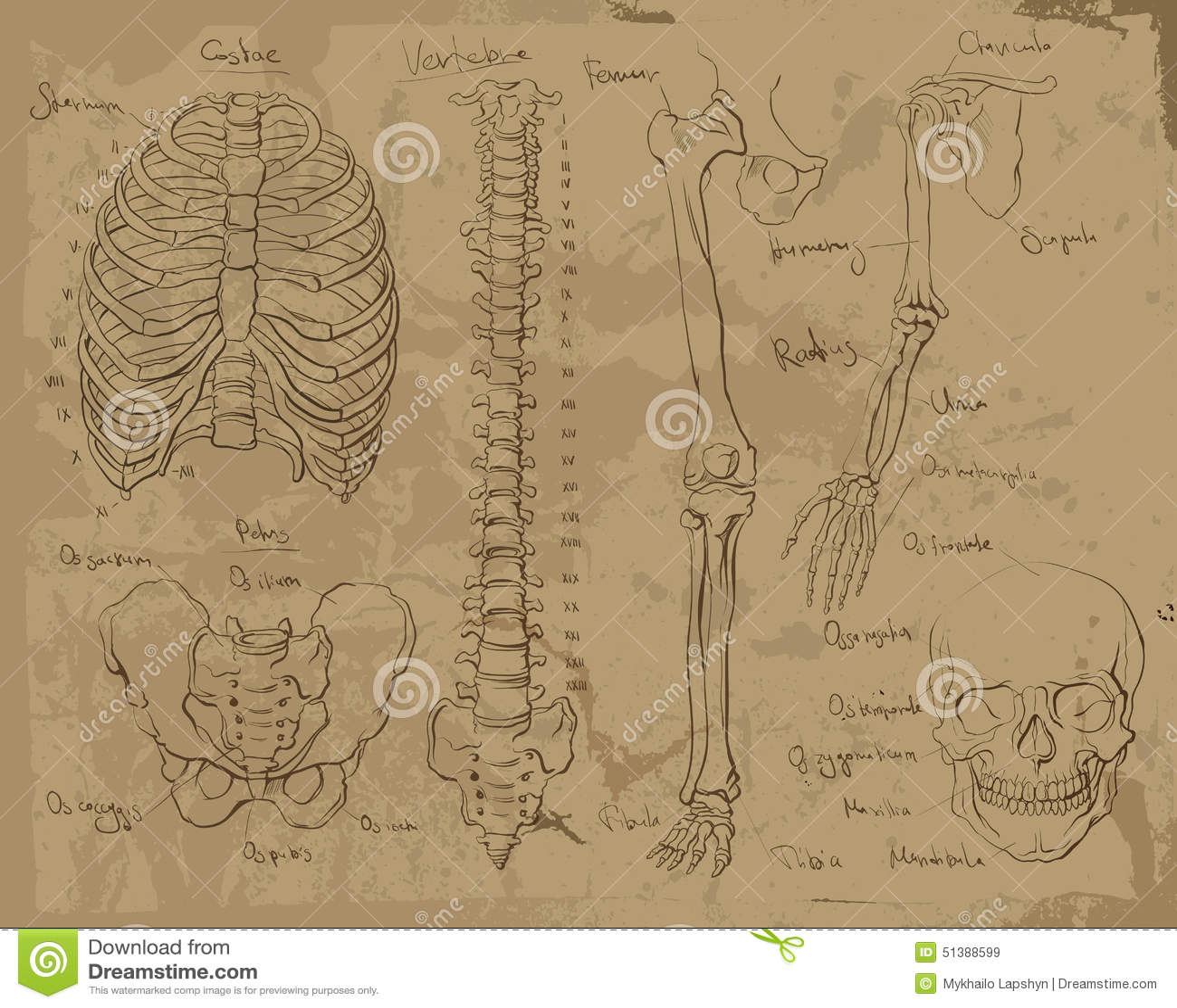 Drawings of human anatomy stock illustration. Illustration of finger ...