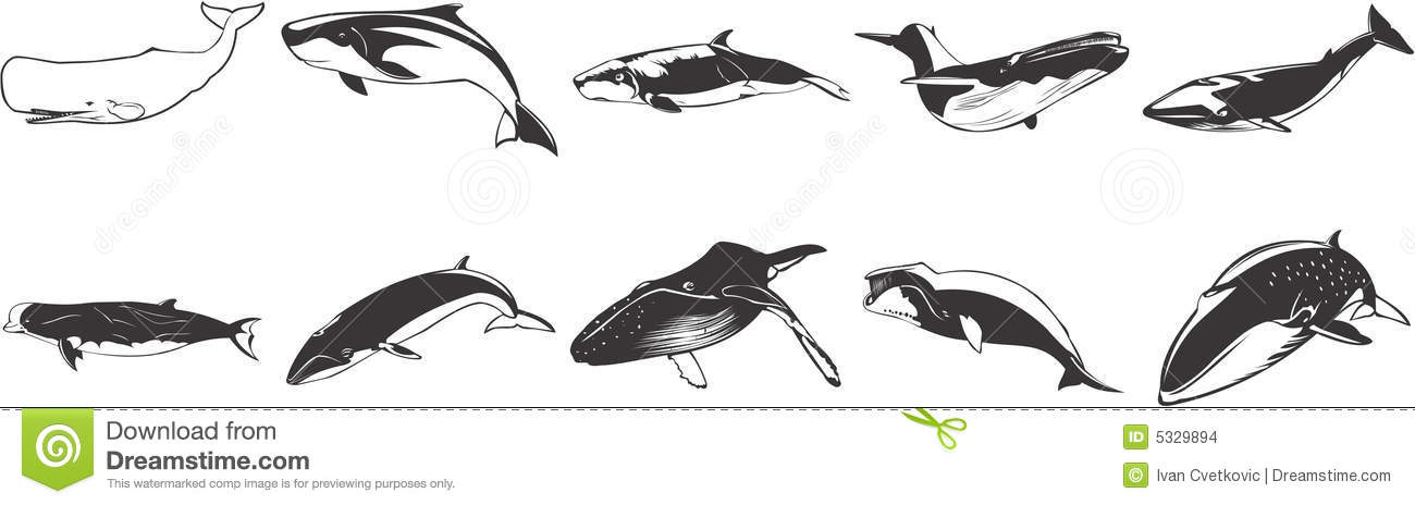 Drawings Of Whales Stock Images Image 5329894