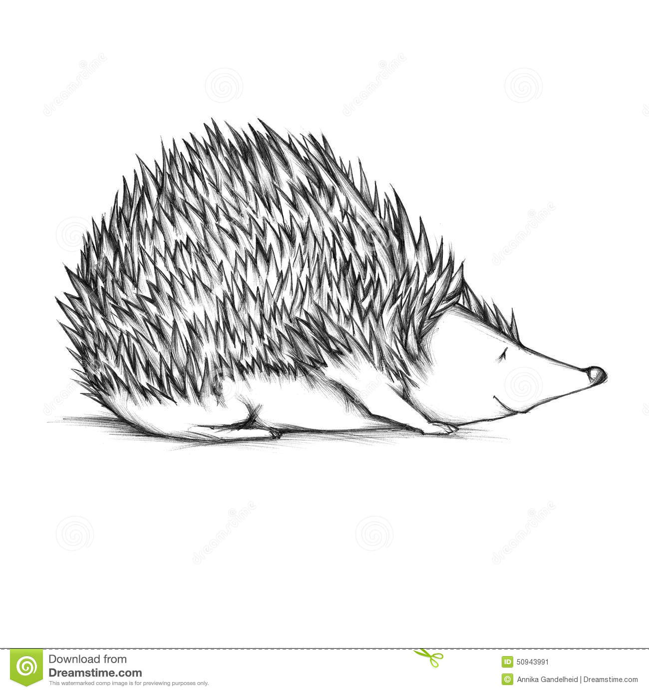 drawn hedgehog stock illustration image 50943991 Cute Weasel weasel clipart free