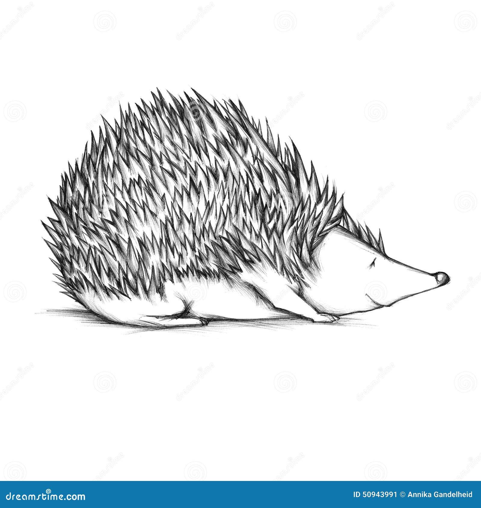 Drawn Hedgehog Stock Illustration - Image: 50943991