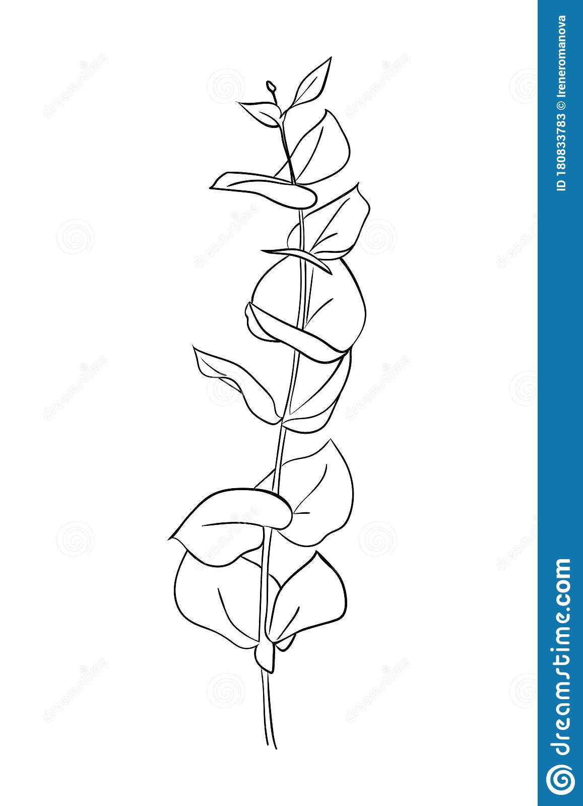 Drawn Outline Leaf Isolated On A White Background Abstract Minimal Plants Stock Vector Illustration Of Drawing Branch 180833783
