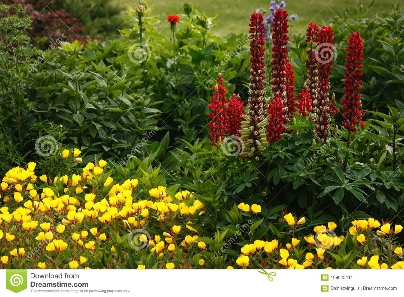 Dream Garden With Flowers In The Summer Stock Image Image Of