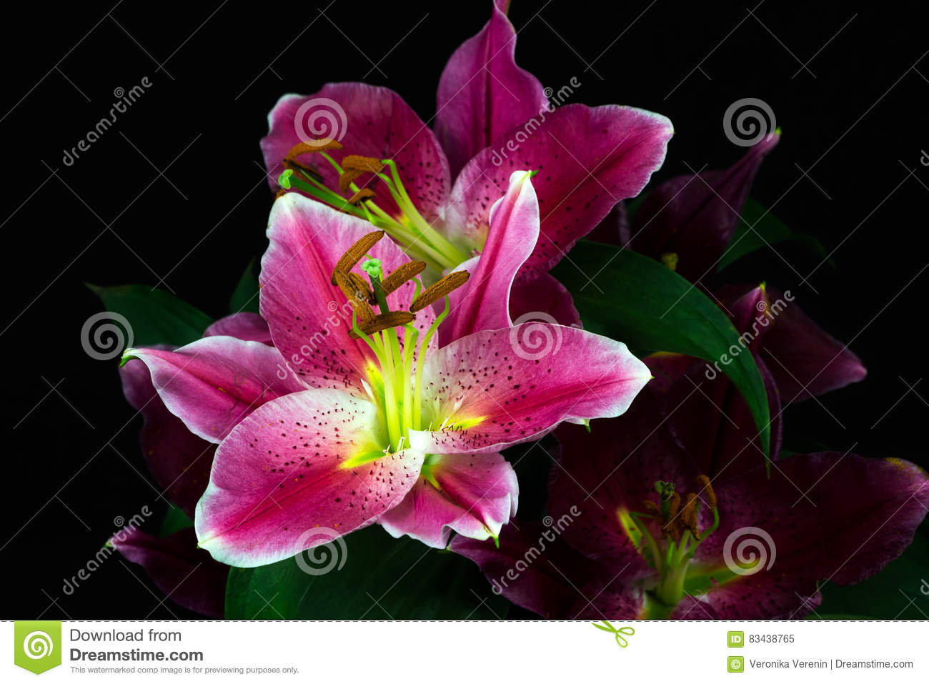 Dream Of Lilies Stock Image Image Of Pastel Lilac Bouquet 83438765