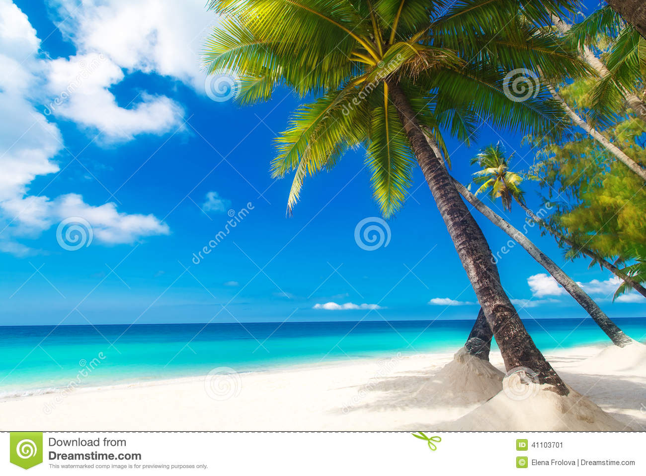 Dream scene. Beautiful palm tree over white sand beach. Summer n